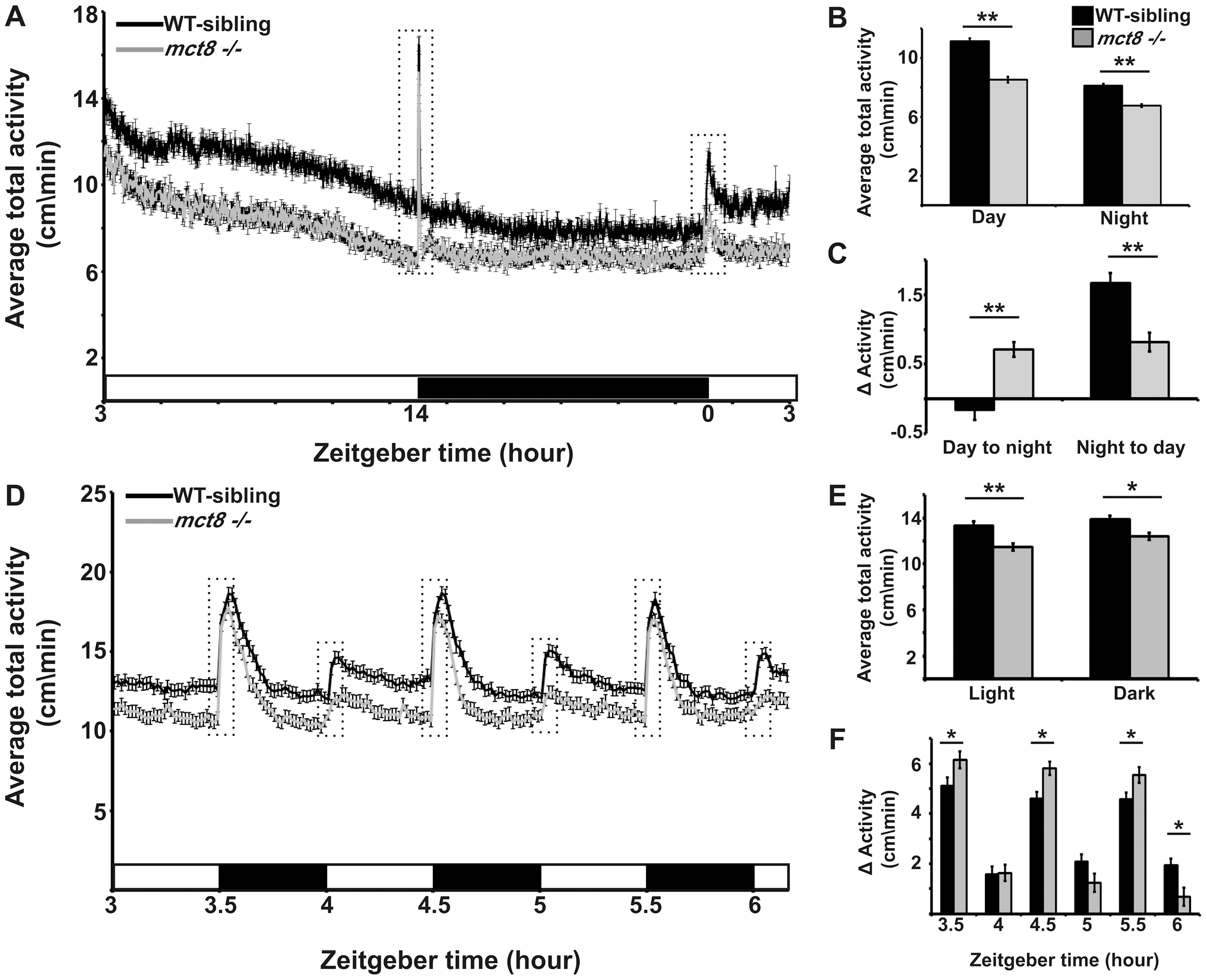 MCT8 mutant exhibits reduced locomotor activity and altered responses to light/dark transitions.