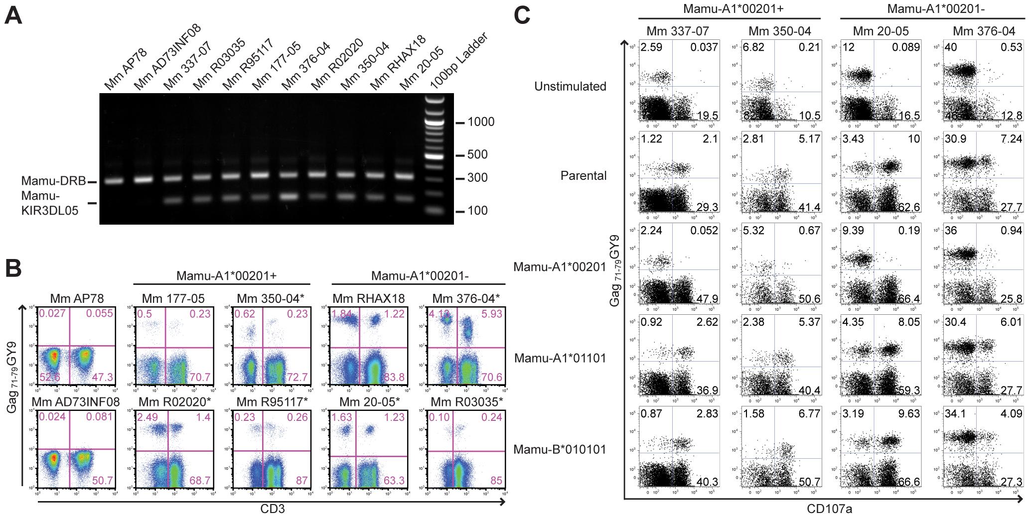 Mamu-A1*00201<sup>+</sup> target cells suppress the degranulation of tetramer-positive NK cells.