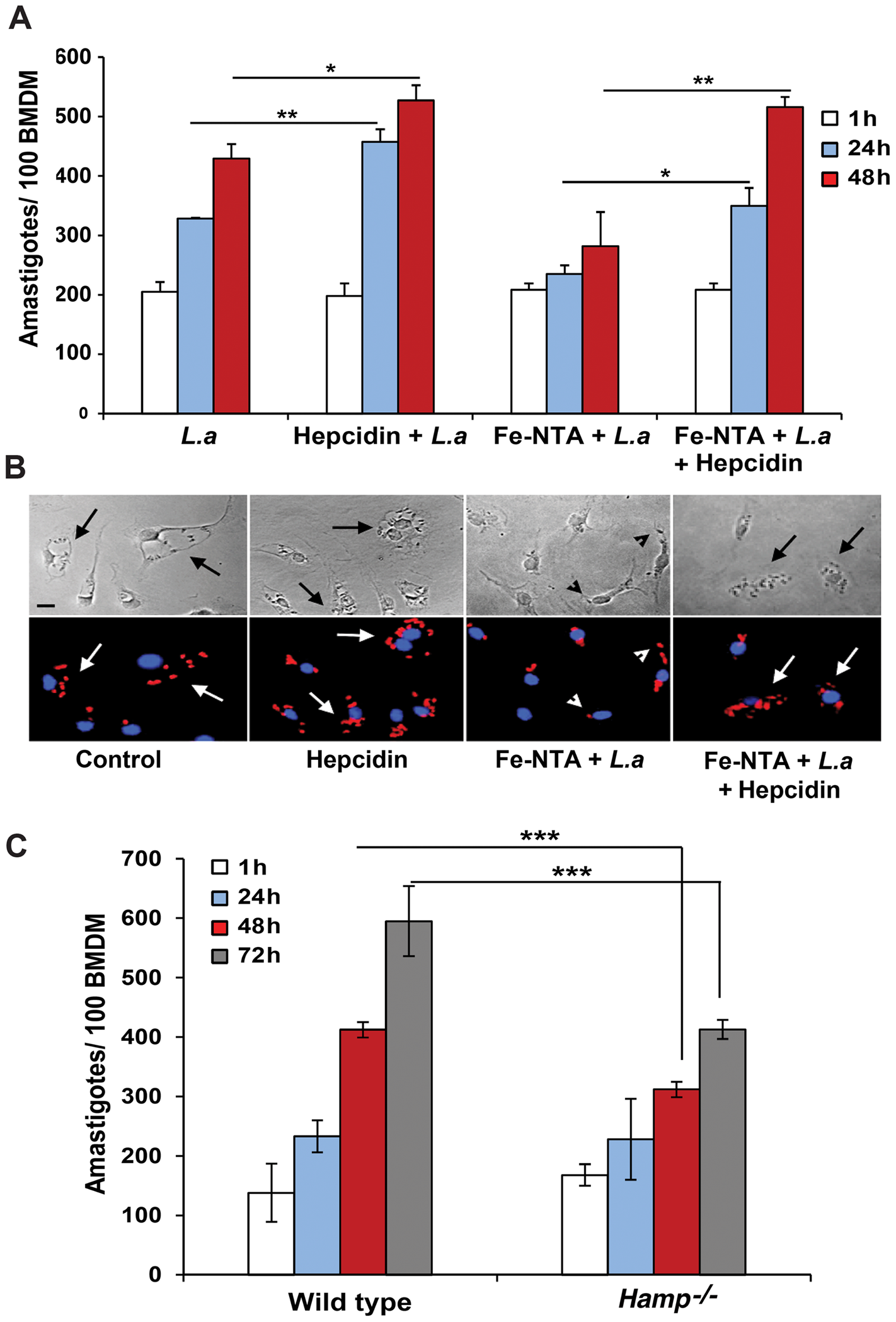 Hepcidin promotes <i>L. amazonensis</i> growth in macrophages.