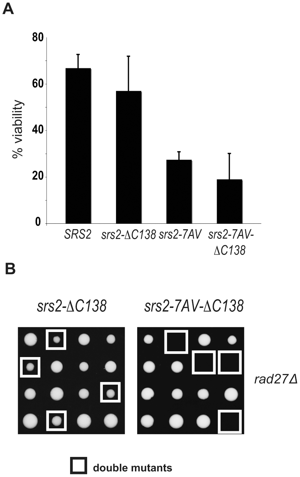 The Cdk1-dependent role of Srs2 does not depend on its interaction with PCNA.
