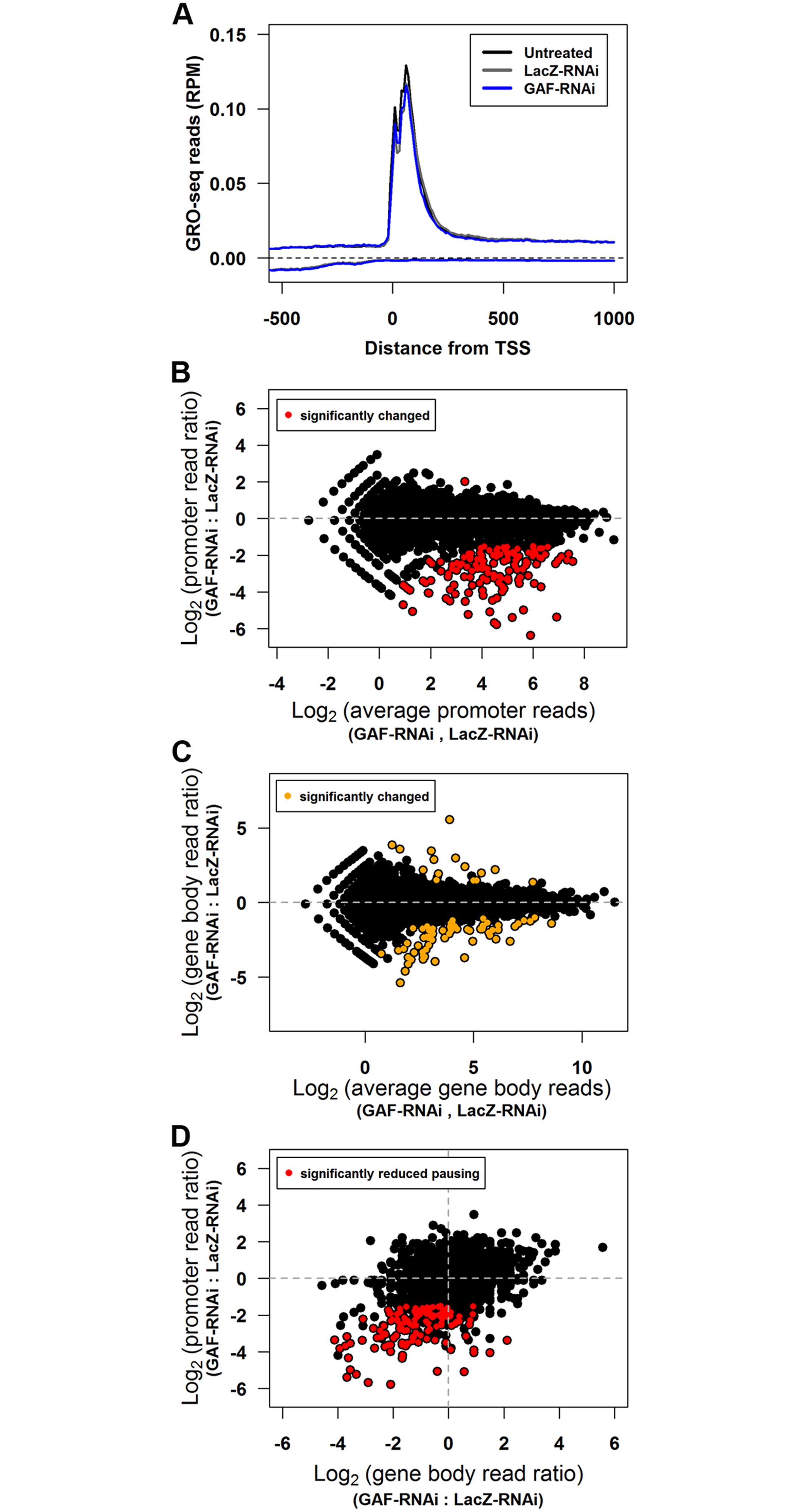 GAF knock-down reduces promoter-proximal polymerase on many genes.