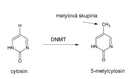 Metylace cytosinu