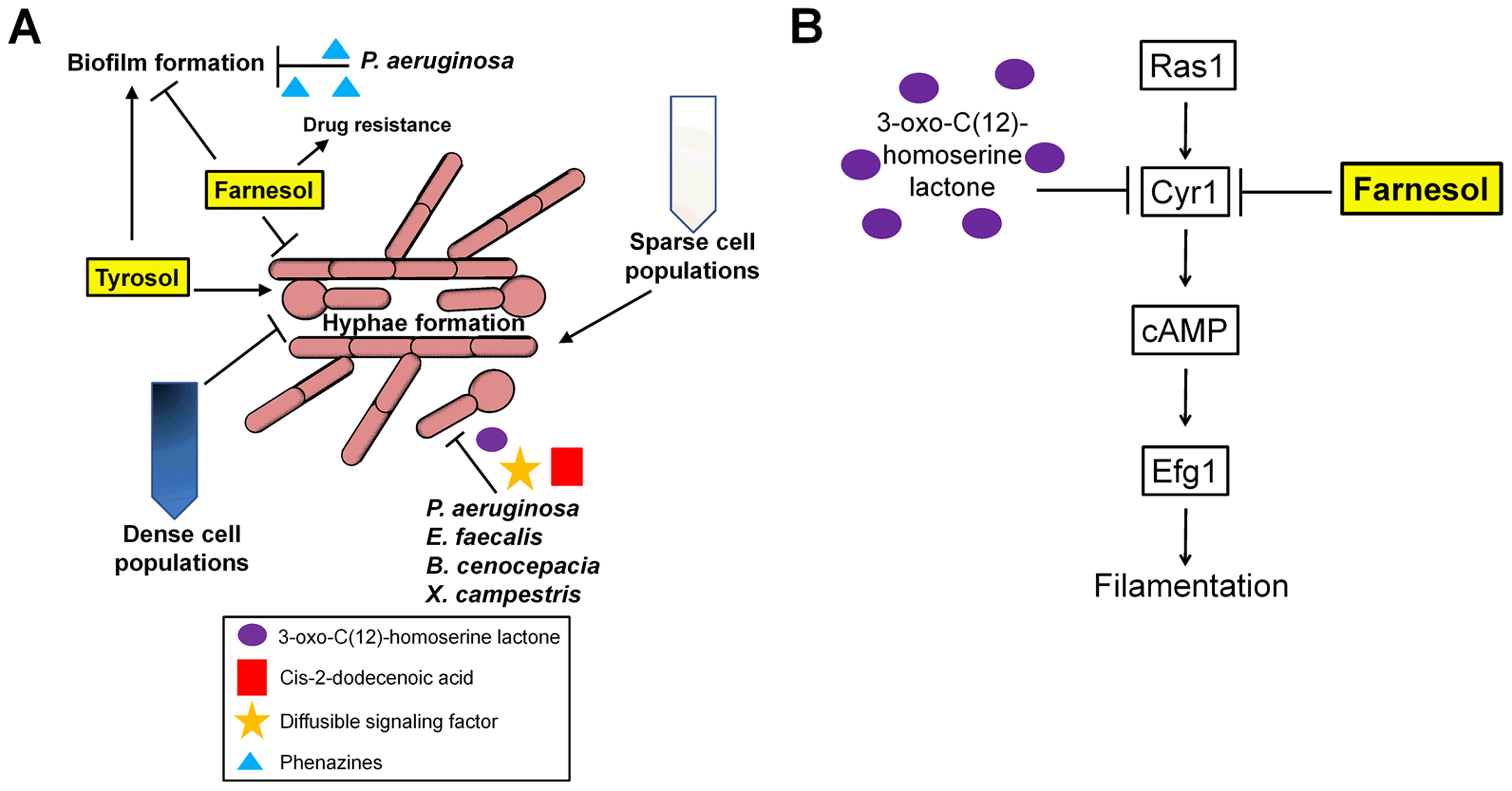 Environmental cues sensed by <i>C. albicans</i>.