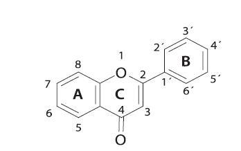 Všeobecná štruktúra flavonoidov