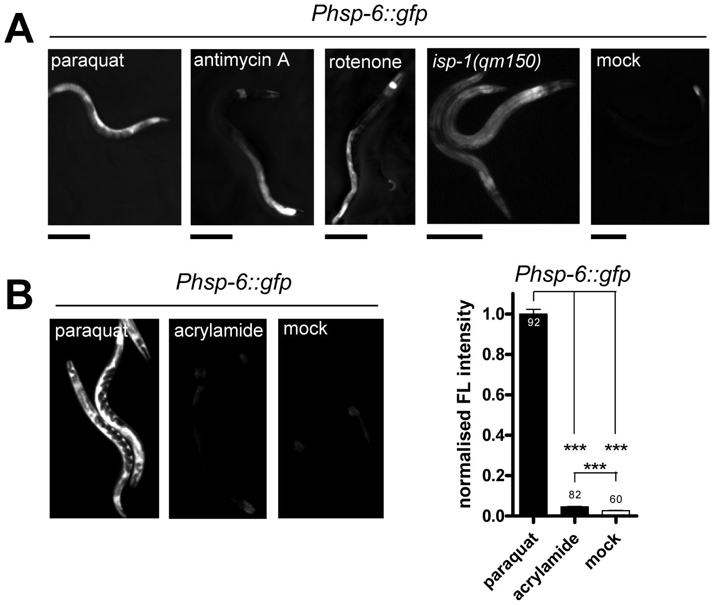 Mitochondrial ROS generators induce <i>hsp-6::gfp.</i>