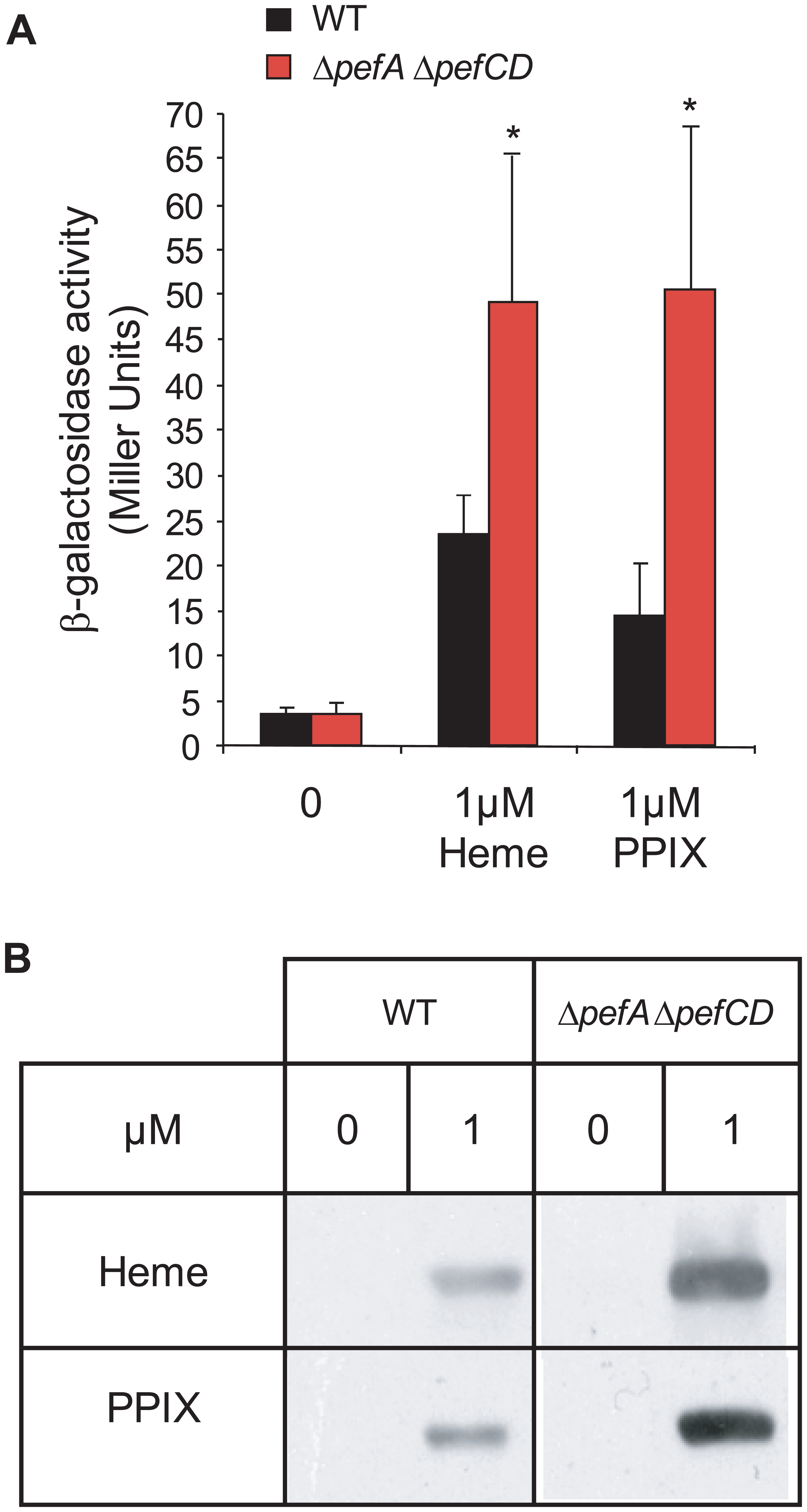 PPIX intracellular accumulation <i>in vivo</i>.