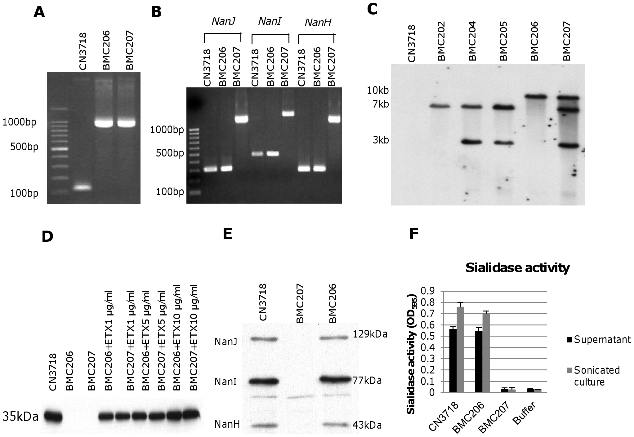 Intron-based mutagenesis to create <i>etx</i> null mutants of wild-type CN3718 and BMC205.