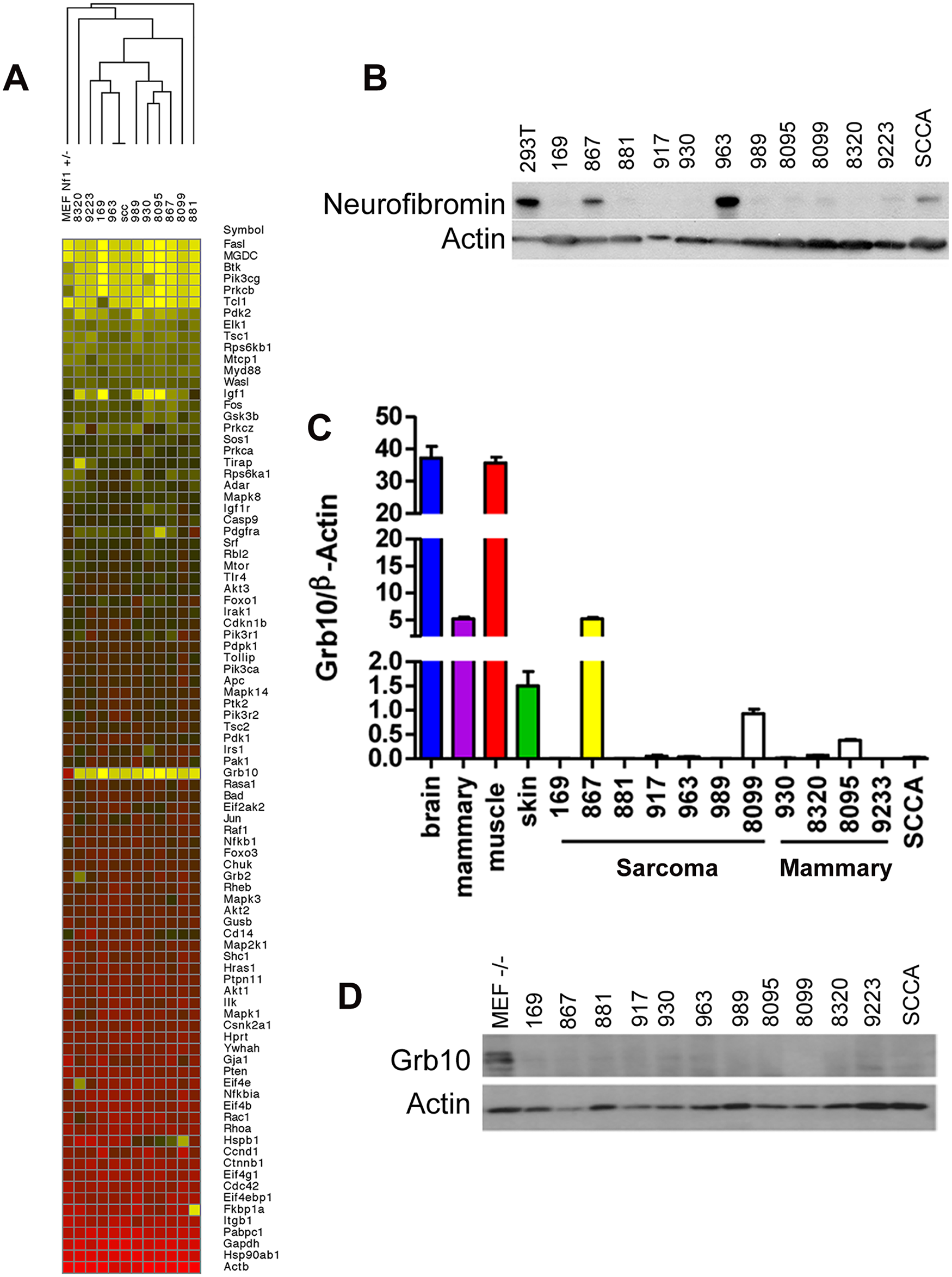 <i>Grb10</i> expression is reduced in <i>Nf1</i> mutant tumor cell lines.