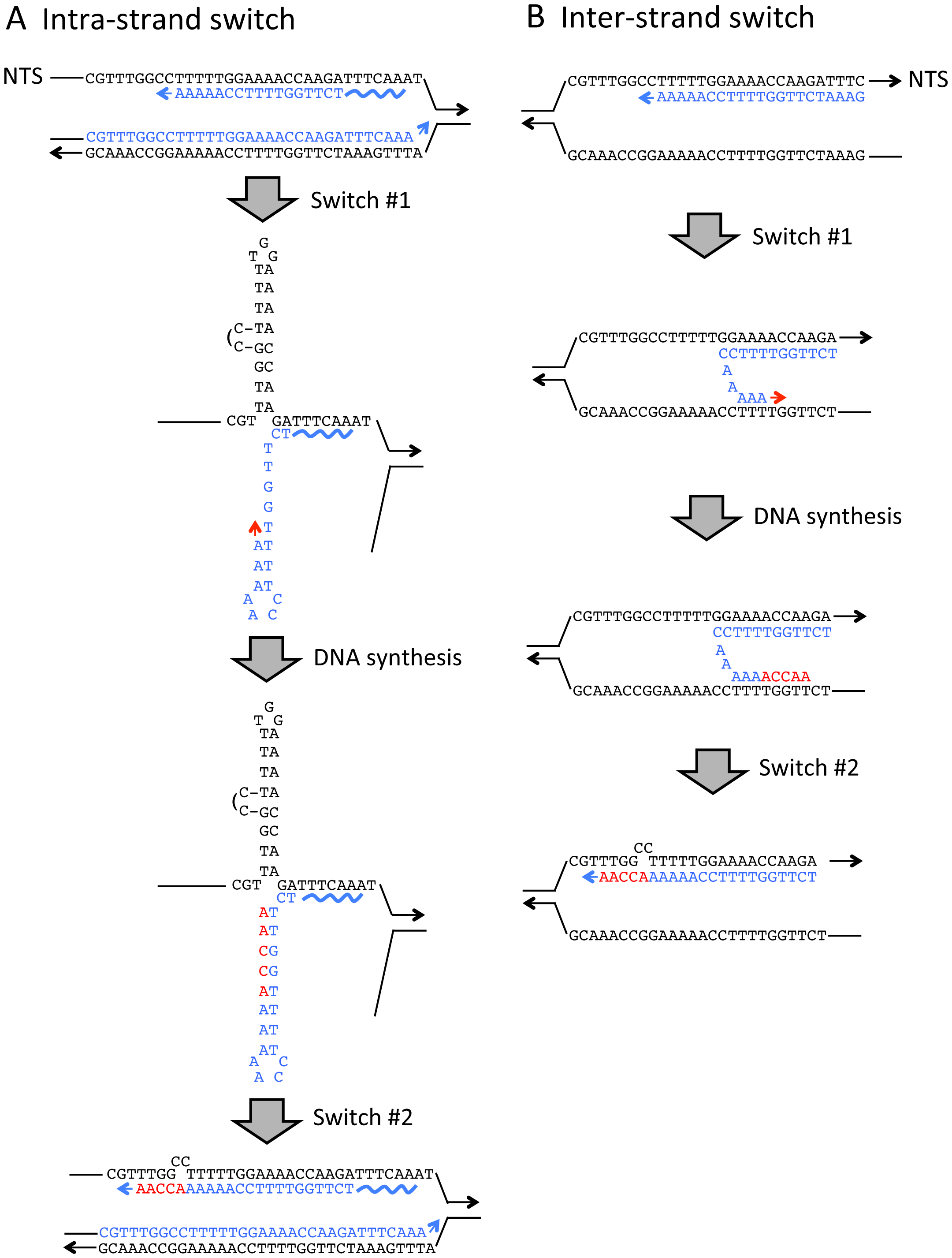 Strand switch models for generating QP mutations.