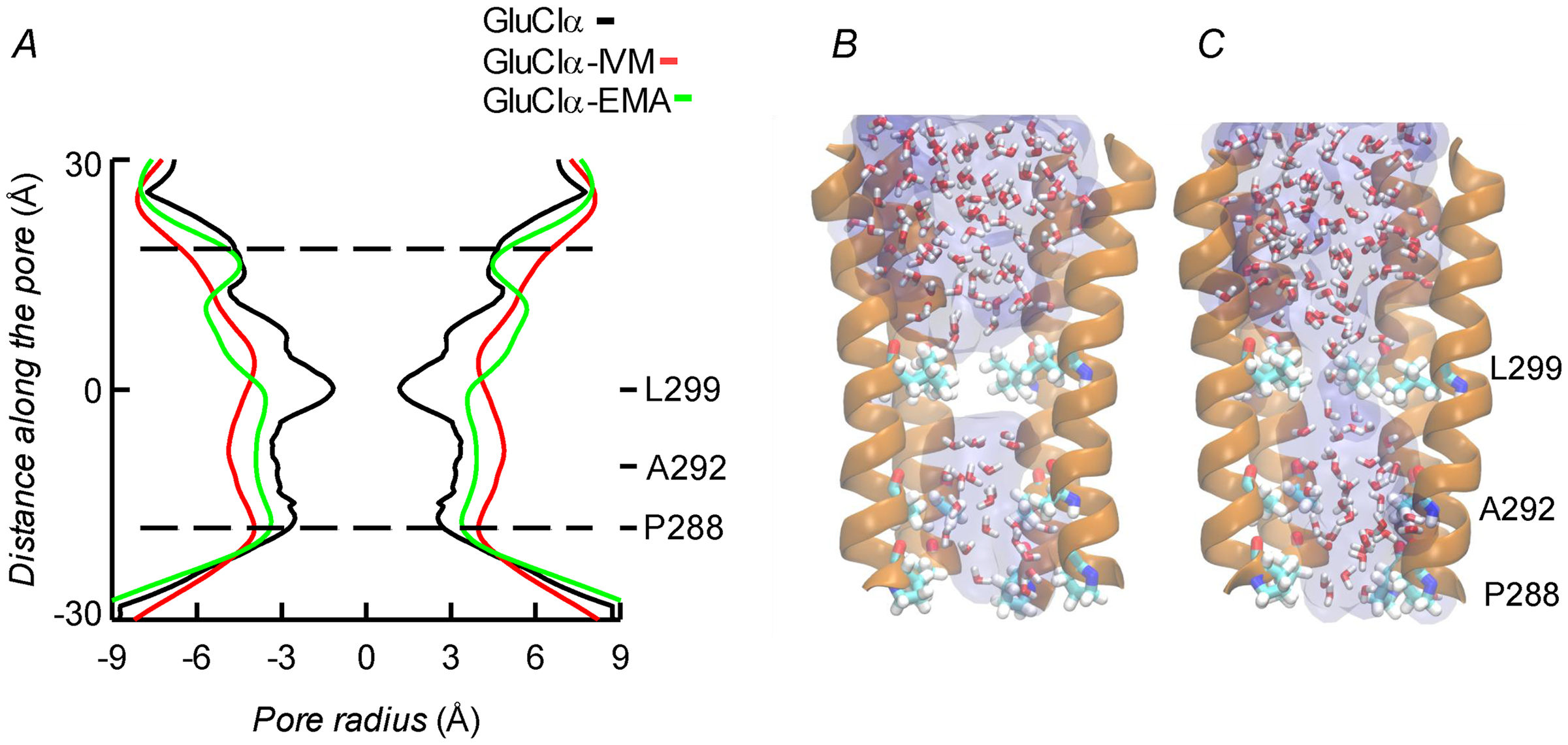 A. Channel pore radius along the z-axis in the receptor alone (black) and in the CrGluClα-emamectin (green) and CrGluClα-ivermectin (red) systems.