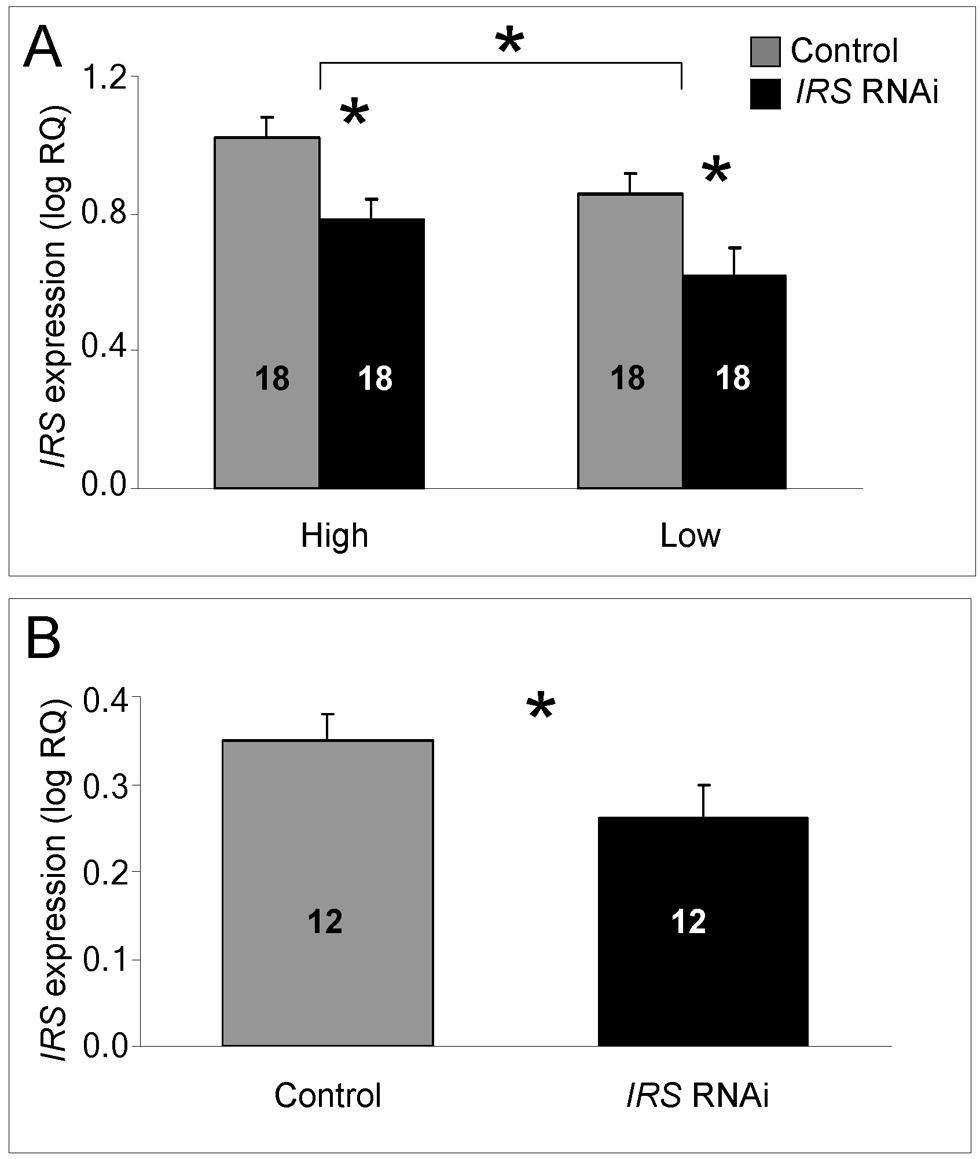 qRT–PCR validation of <i>IRS</i> RNAi in peripheral fat body.