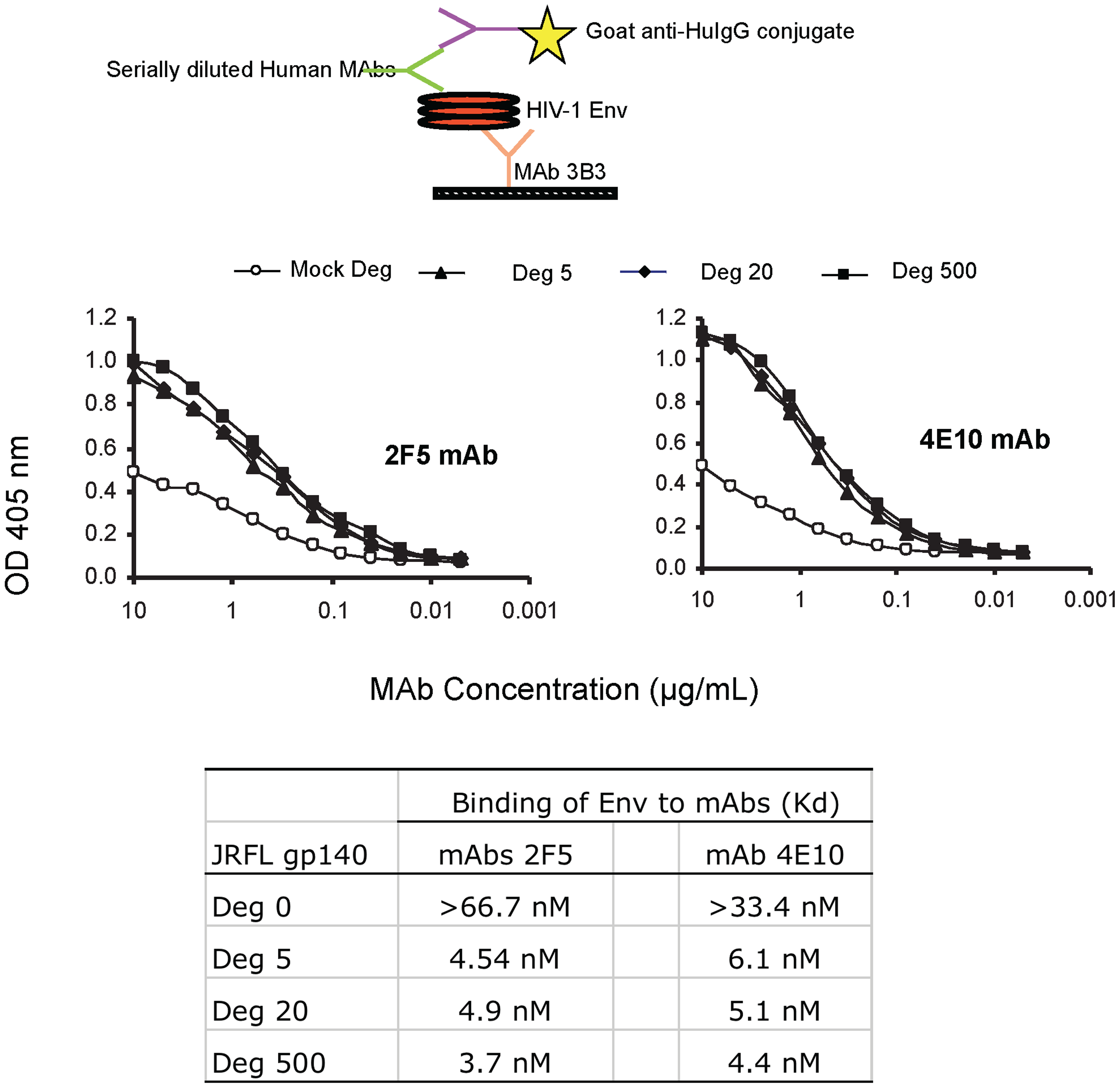 Binding kinetics of mAbs 2F5 and 4E10 to WT glycosylated and deglycosylated JRFL gp140.