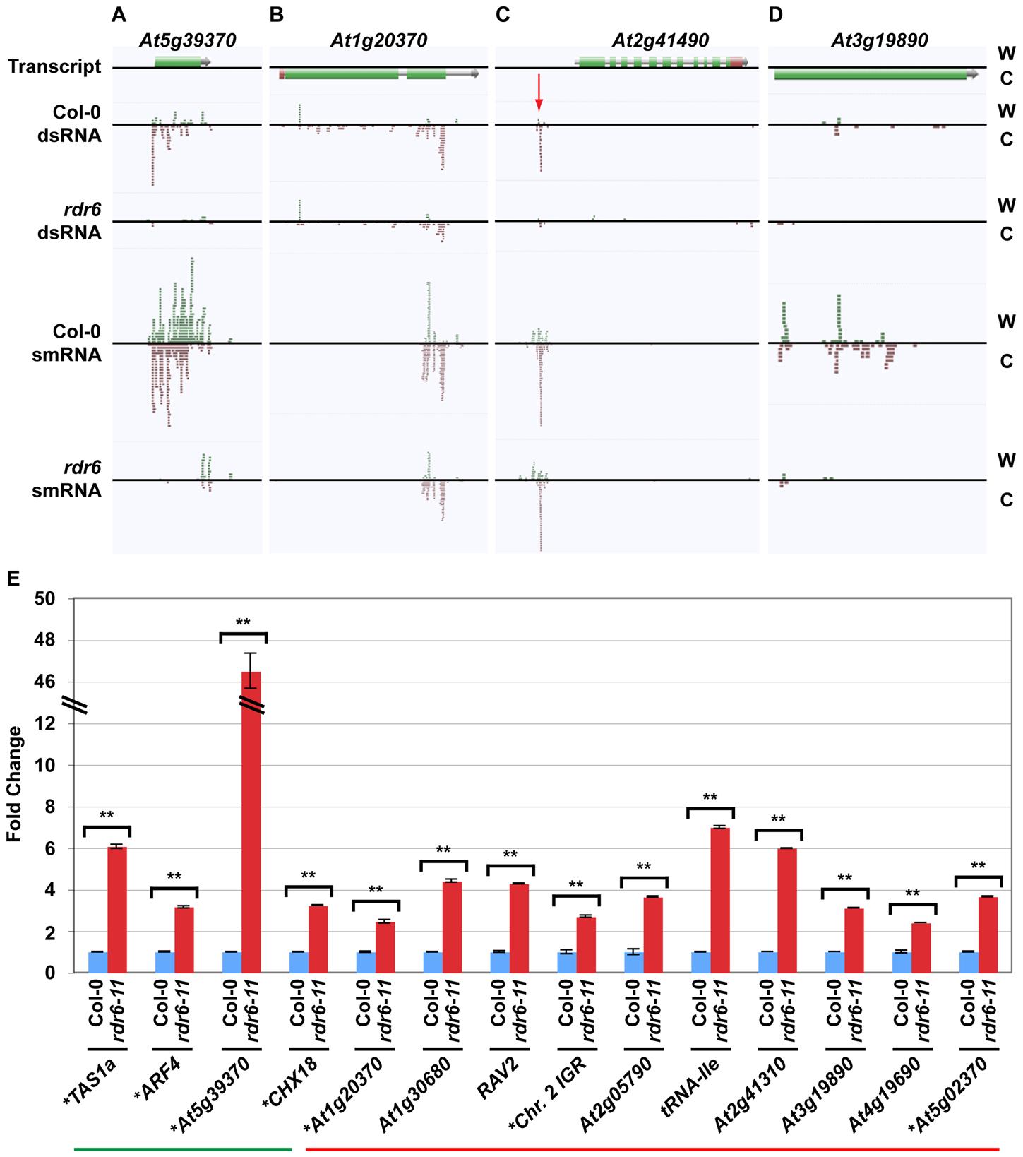 Novel smRNA–producing substrates of RDR6.