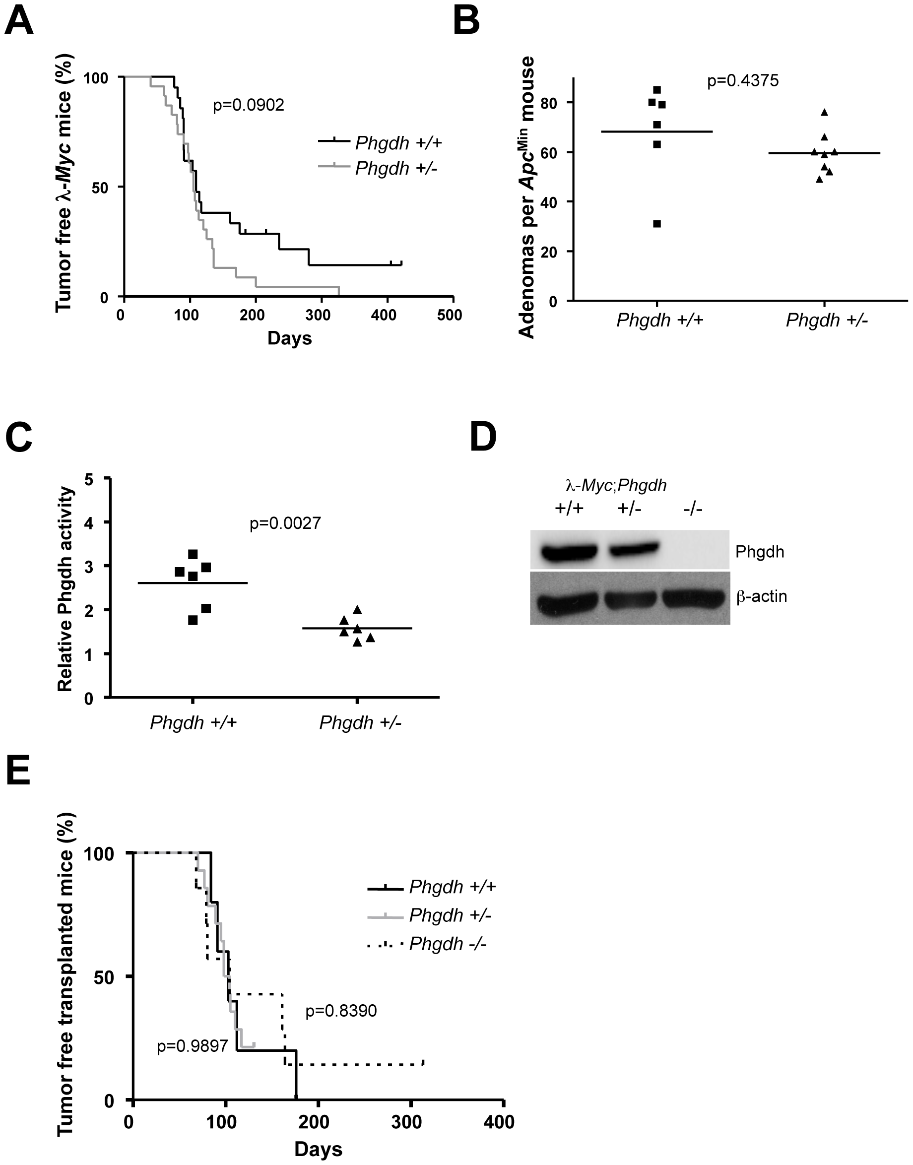 Phgdh is dispensable for lymphomagenesis in λ-<i>Myc</i> transgenic mice.