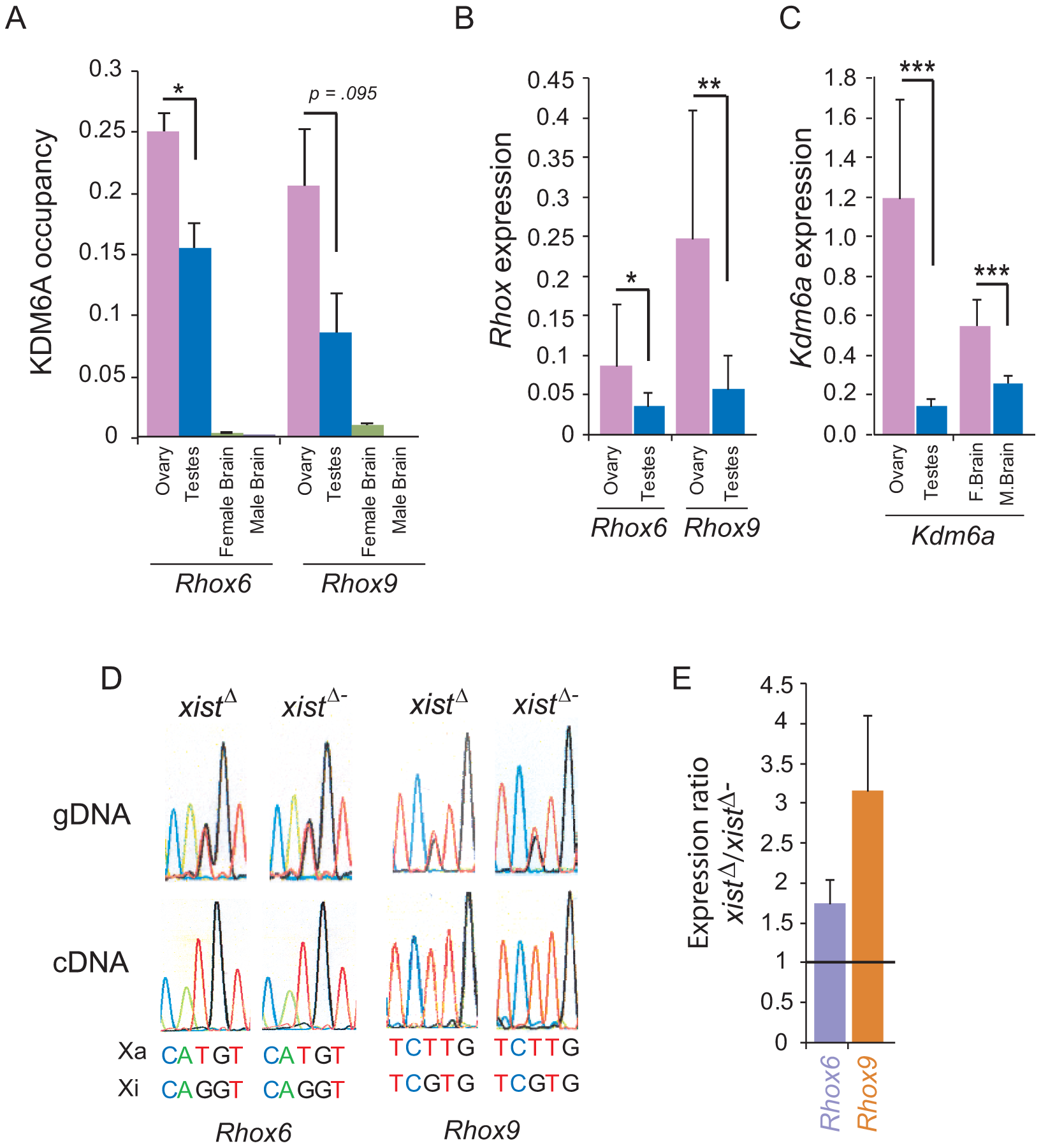 <i>Rhox6</i> and <i>9</i> expression and KDM6A occupancy are high in ovary where the genes are imprinted.