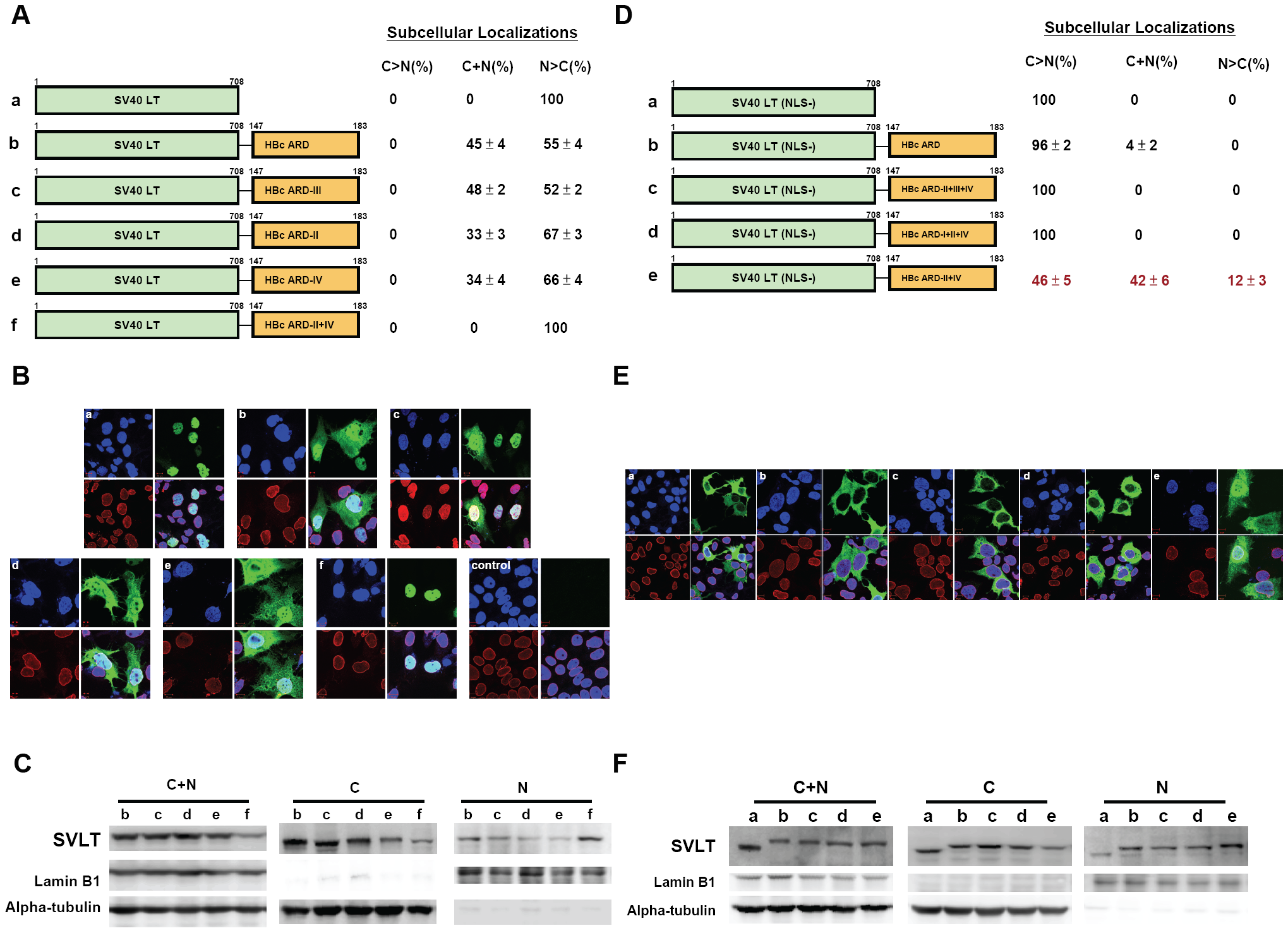 Fig. 3A–3C: Both HBc ARD-II and ARD-IV can independently contribute to cytoplasmic localization of SV40 large T antigen.