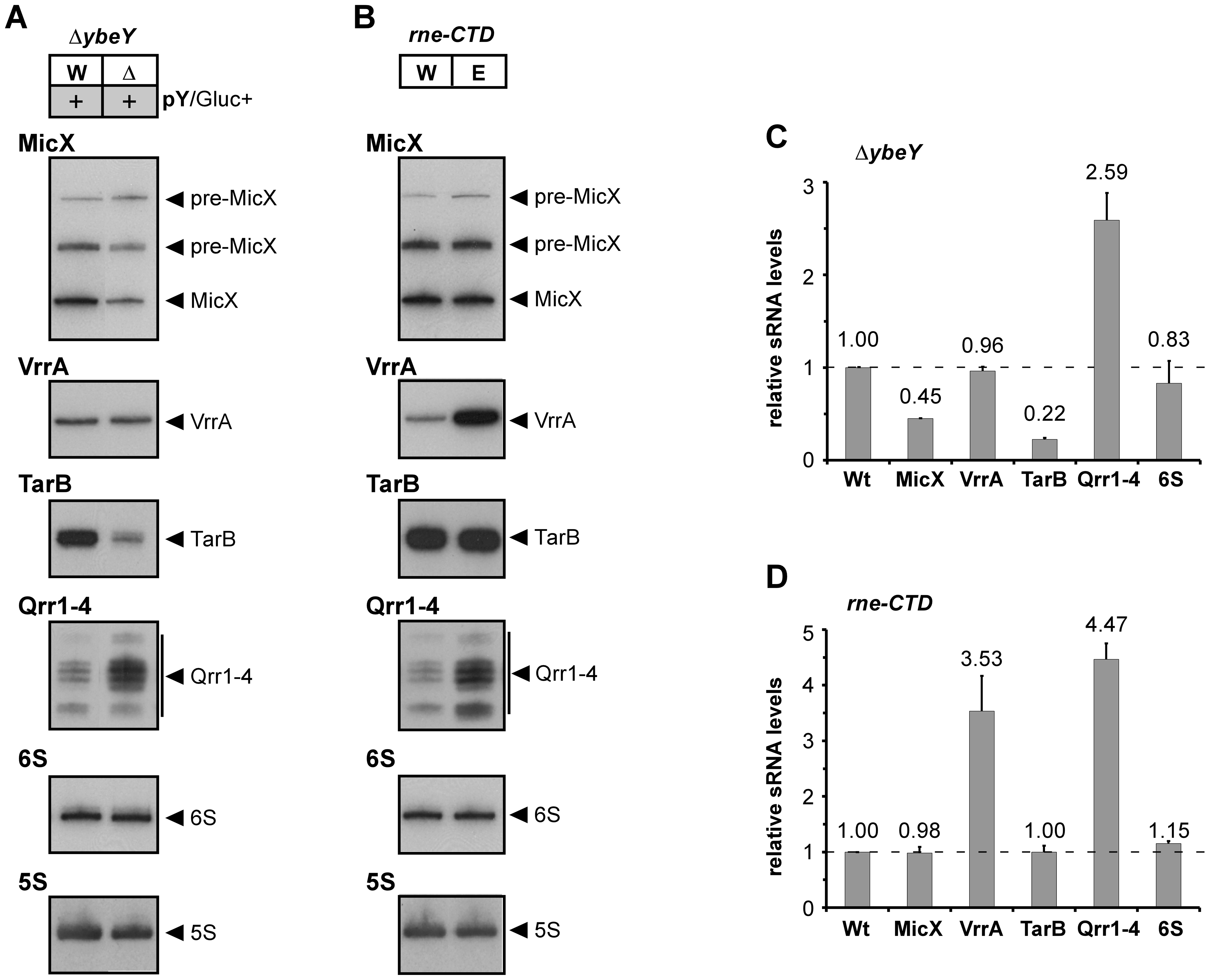 sRNA analysis in <i>V. cholerae</i> Δ<i>ybeY</i> and <i>rne</i>-CTD::Tn.