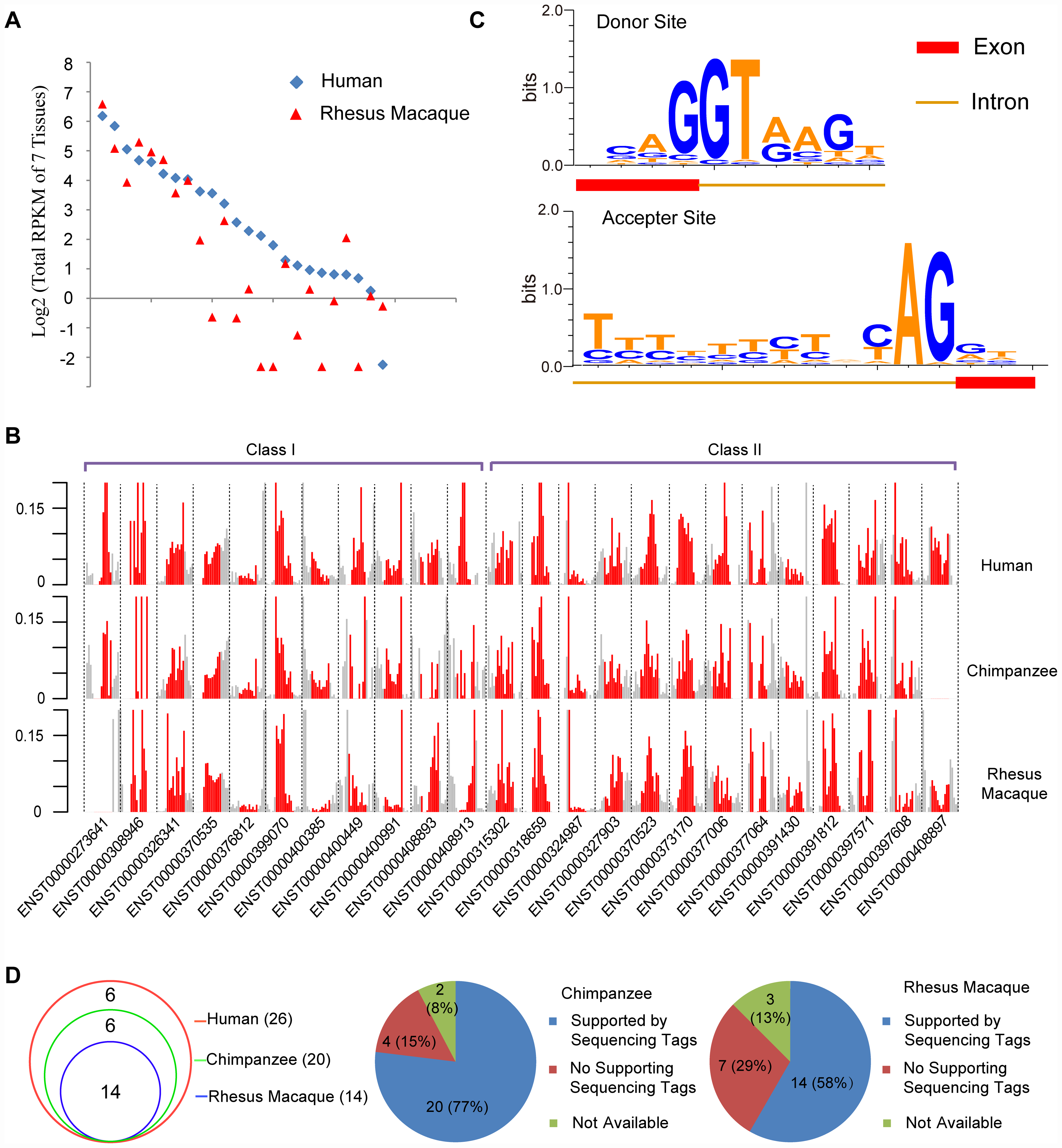 Orthologs of human <i>de novo</i> protein-coding genes encode structure-matched non-coding RNAs in rhesus macaque or chimpanzee.