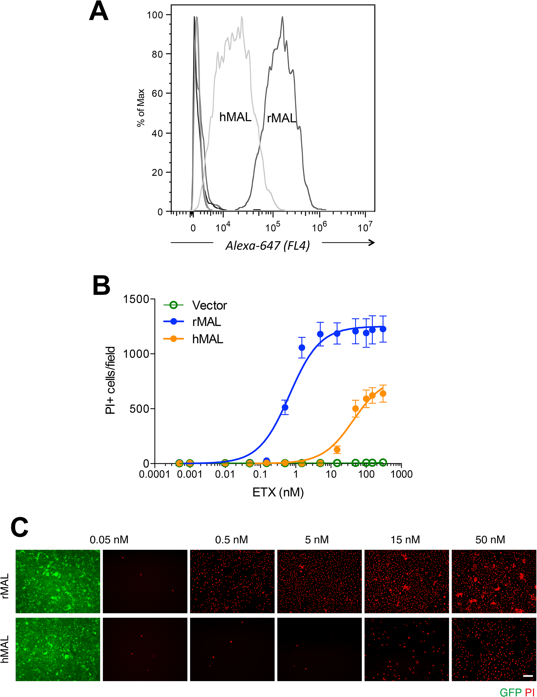 Differential binding and cytotoxicity of ETX to cells expressing MAL orthologues.