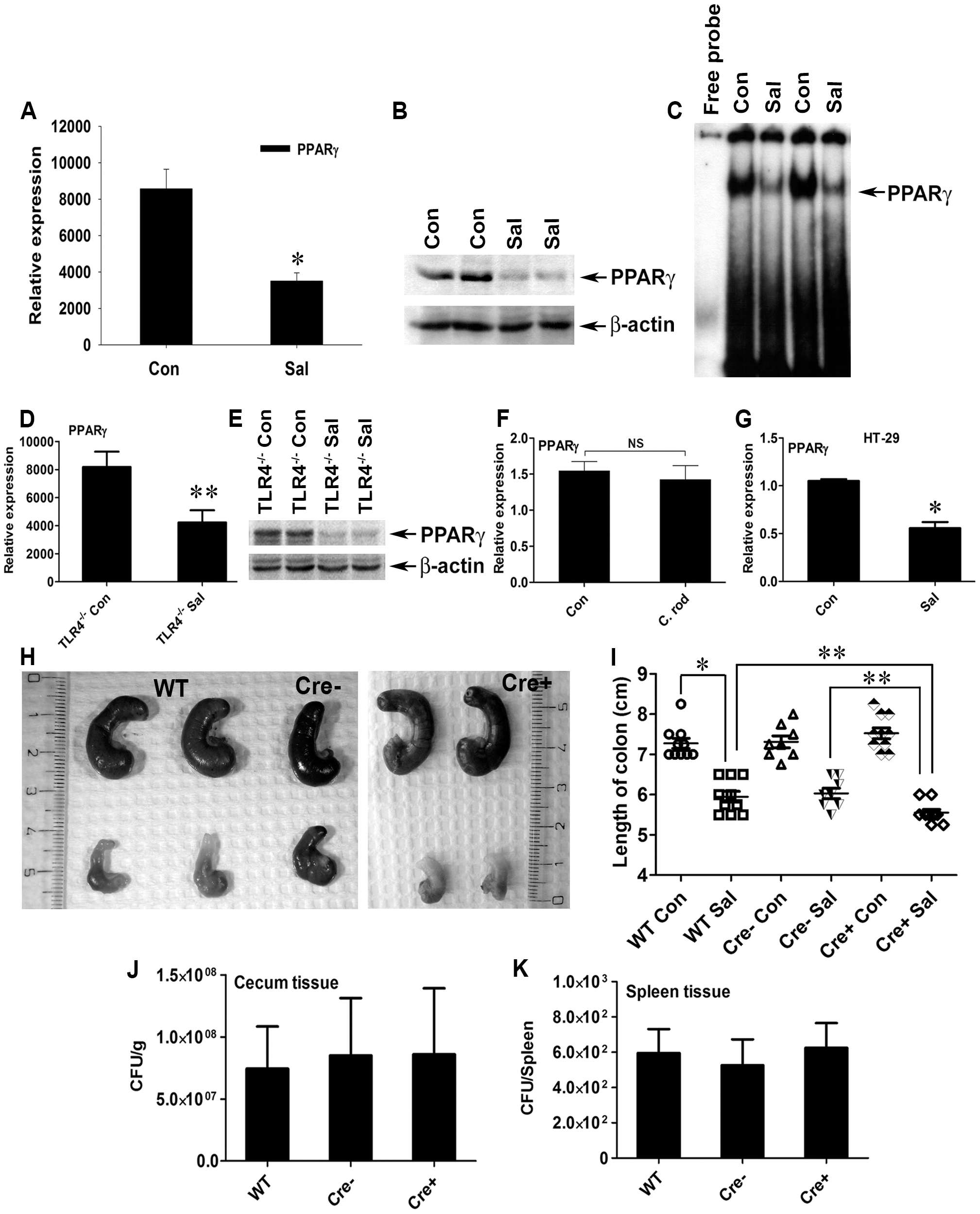 <i>S.</i> Typhimurium down-regulates PPARγ while inducing colitis in C57BL/6 mice.