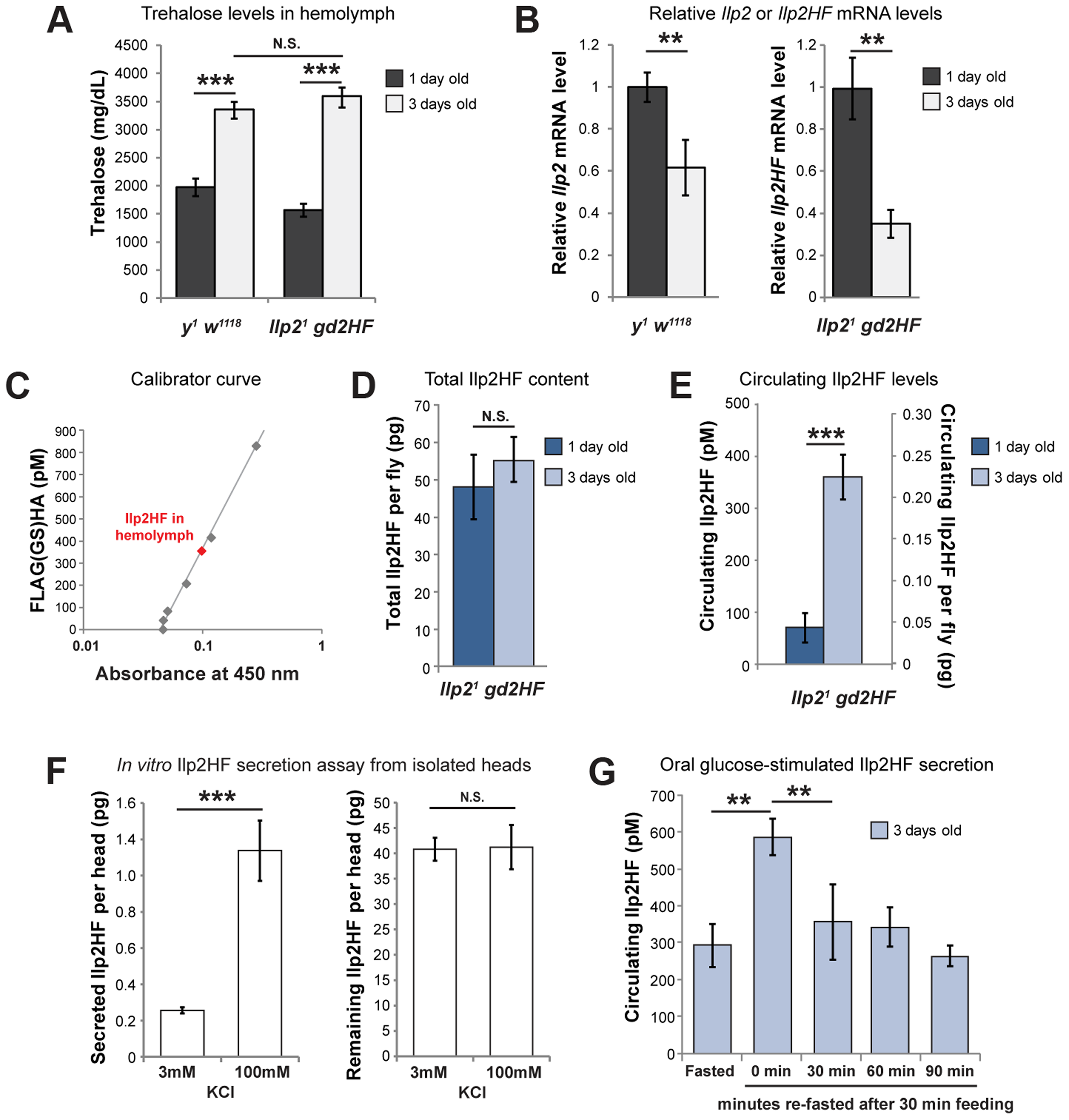 Physiological regulation of Ilp2HF production and secretion.