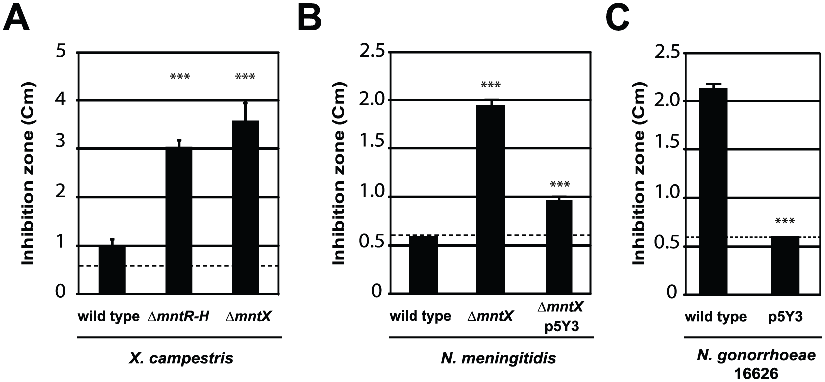 MntX which confers Mn resistance, is often not functional in <i>N. gonorrhoeae</i>.