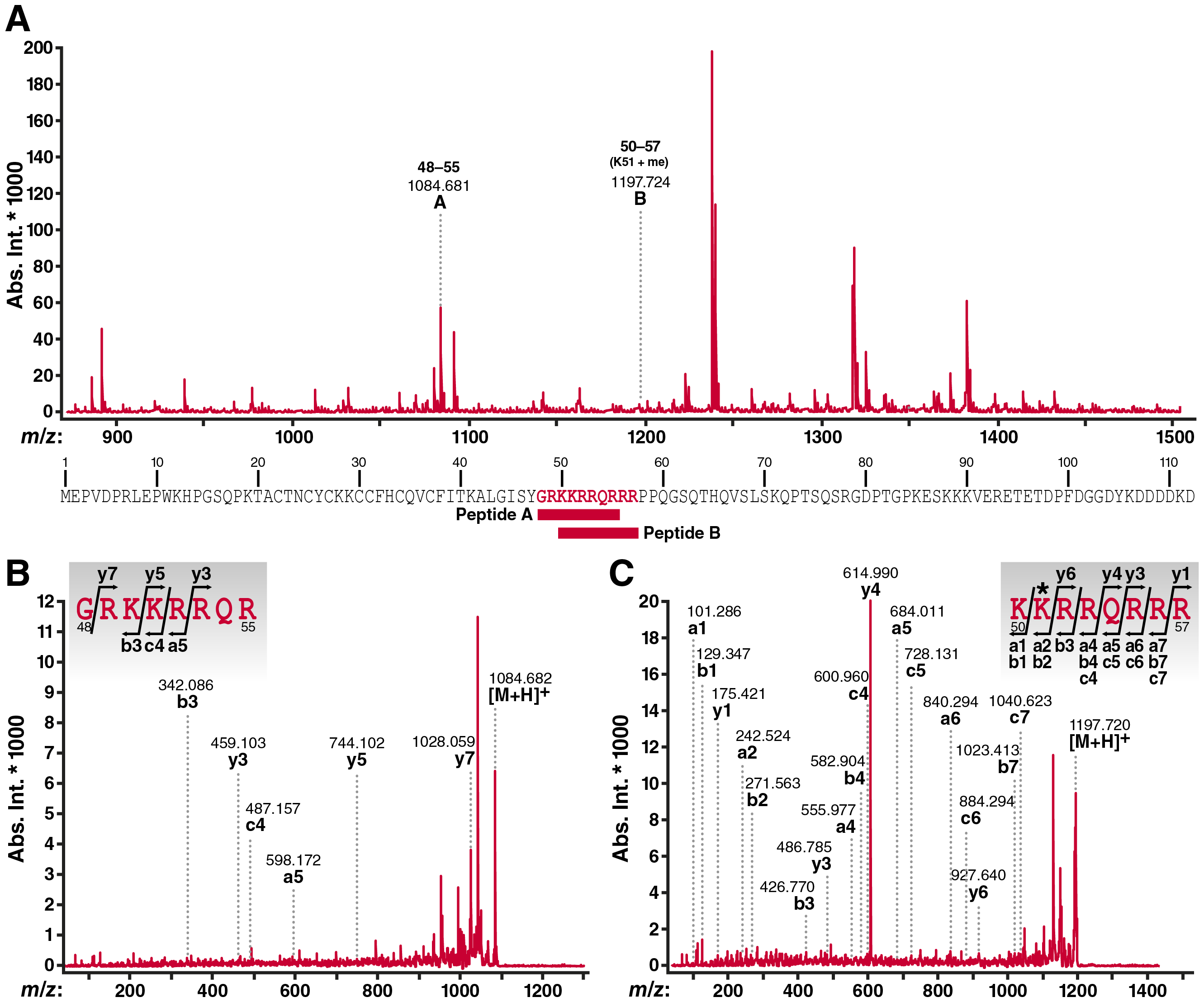 MALDI-TOF mass spectrometric analysis of cellular Tat confirms K51 monomethylation.