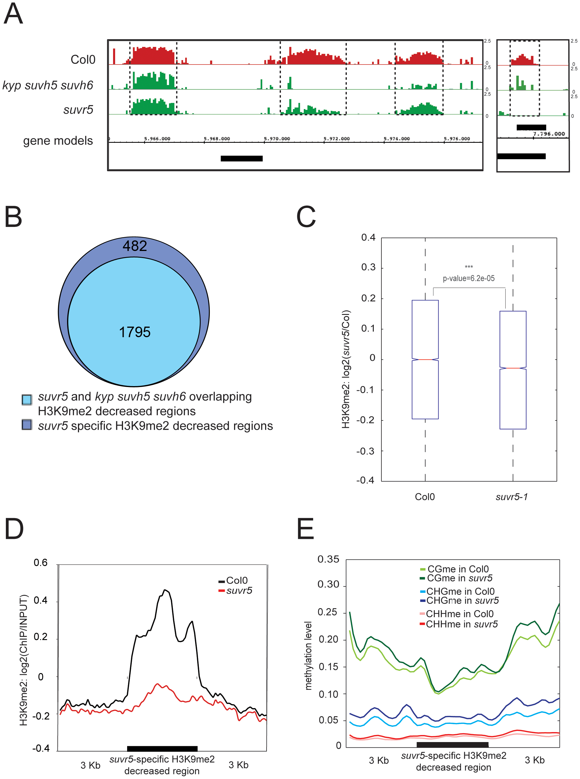 SUVR5-specific H3K9me2 deposition correlates with the zinc finger domain binding and promotes gene silencing.