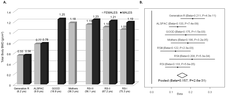 TB-BMD across cohorts and meta-analysis.