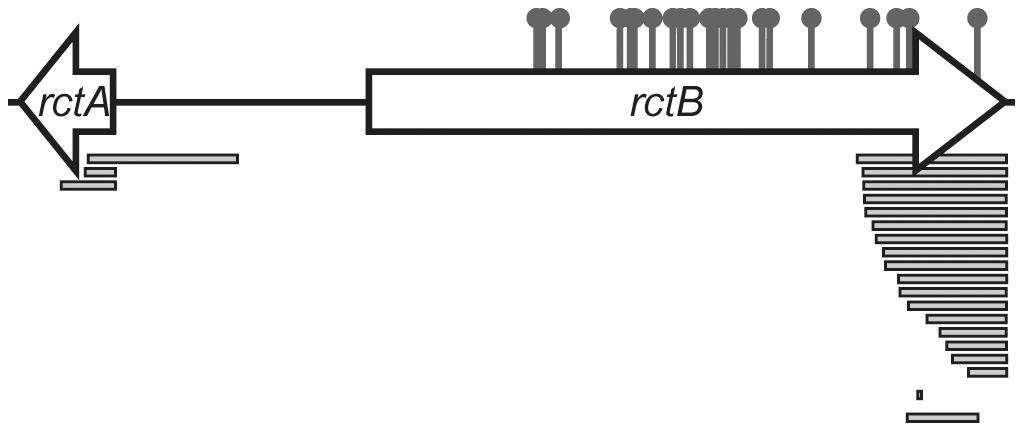 Map of locations of mutations that enabled replication of pYB292.