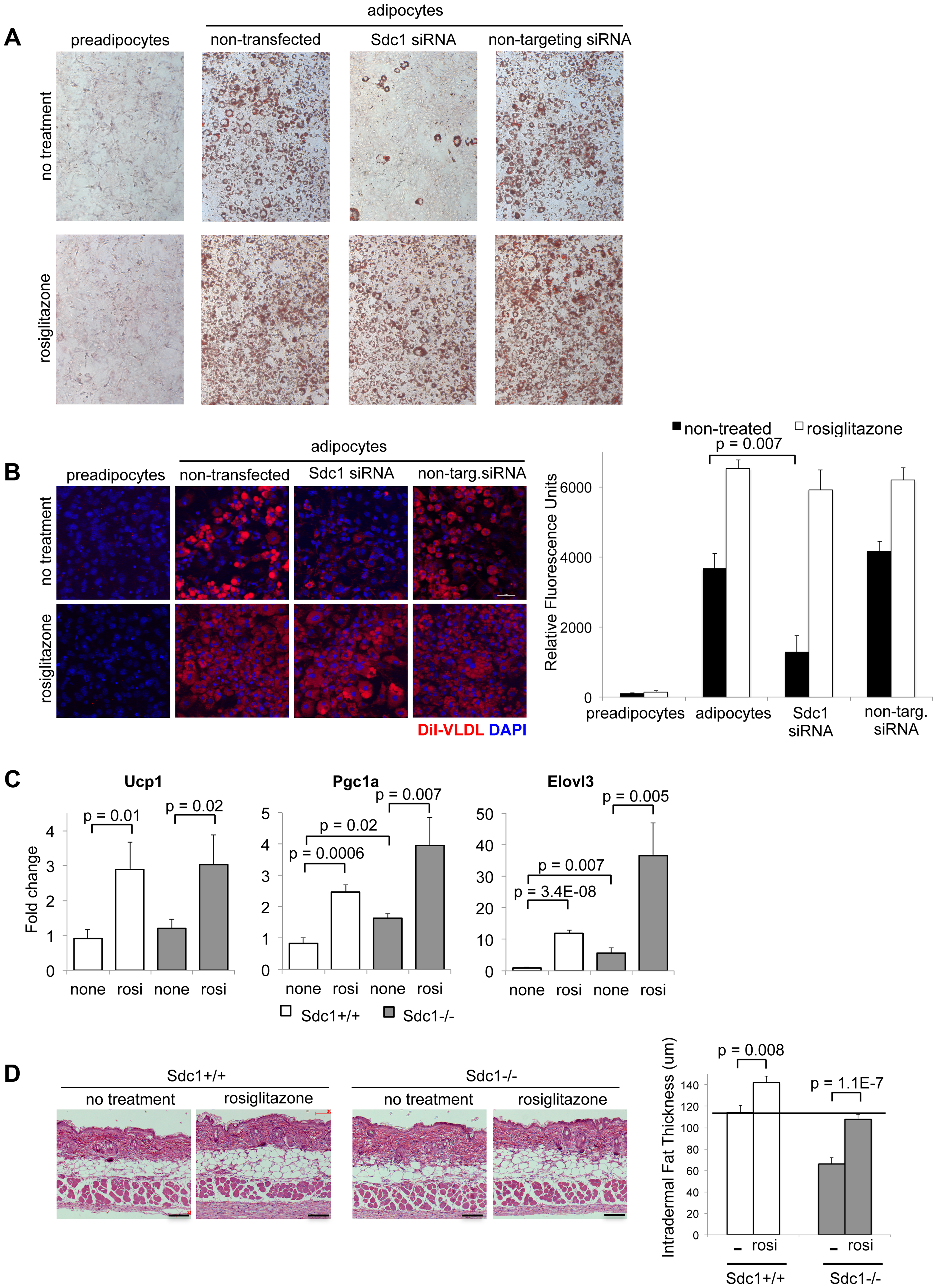 Adipocyte differentiation can be rescued <i>in vitro</i> and <i>in vivo</i> by the PPARγ agonist, rosiglitazone.