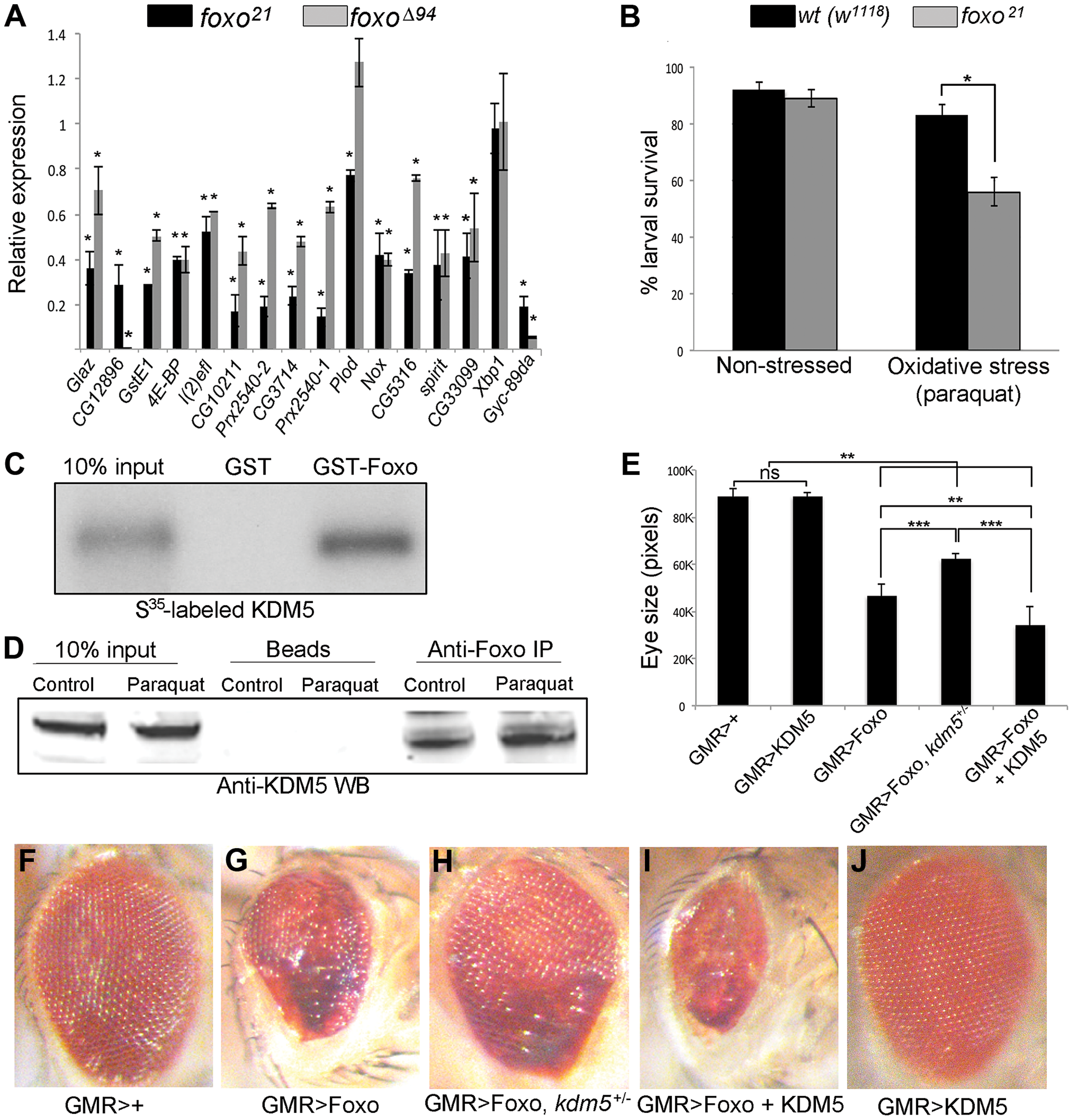 KDM5 and Foxo regulate a common set of genes and genetically and physically interact.