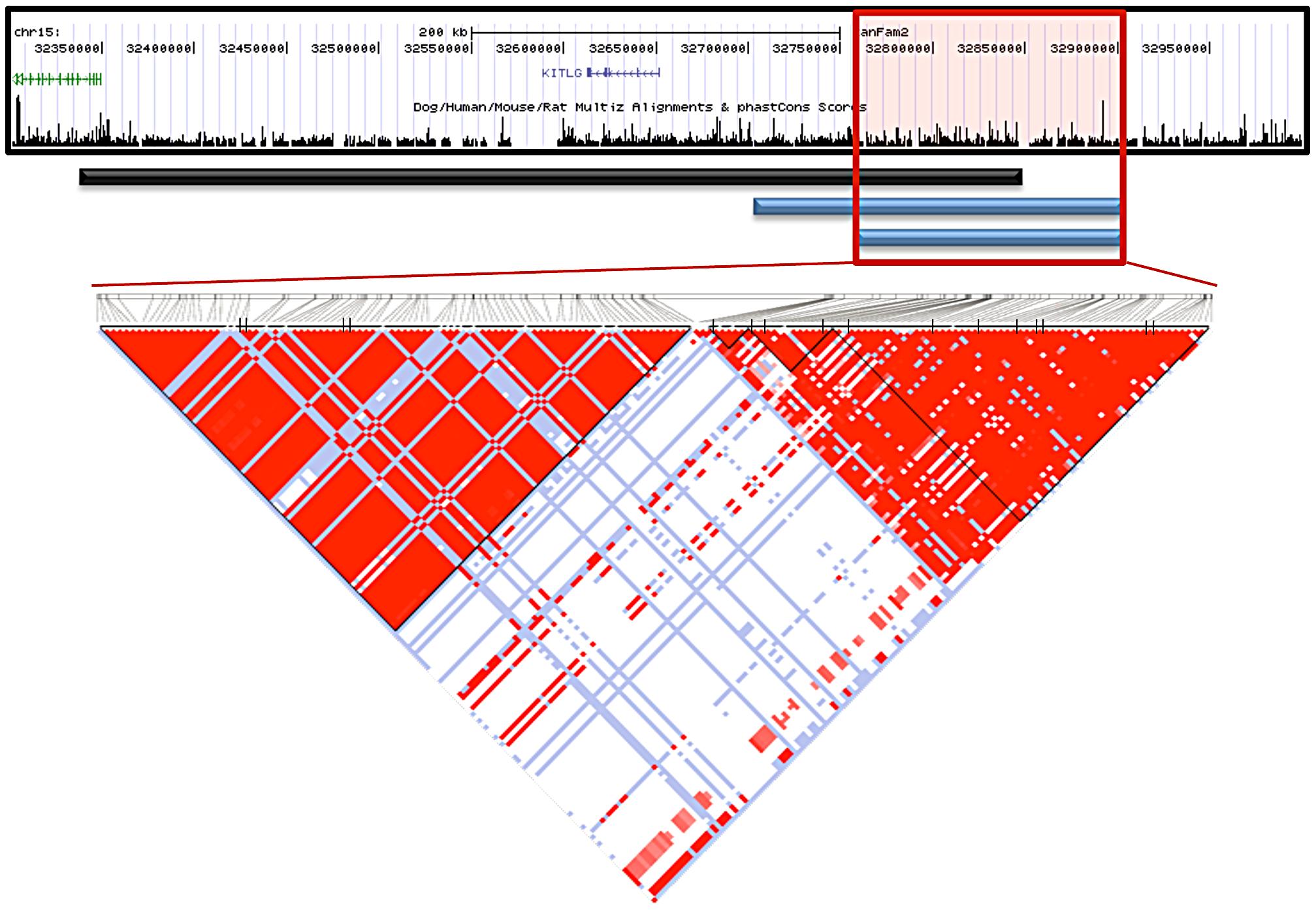 Interbreed haplotype analysis refines the SCCD locus to 144.9 Kb.