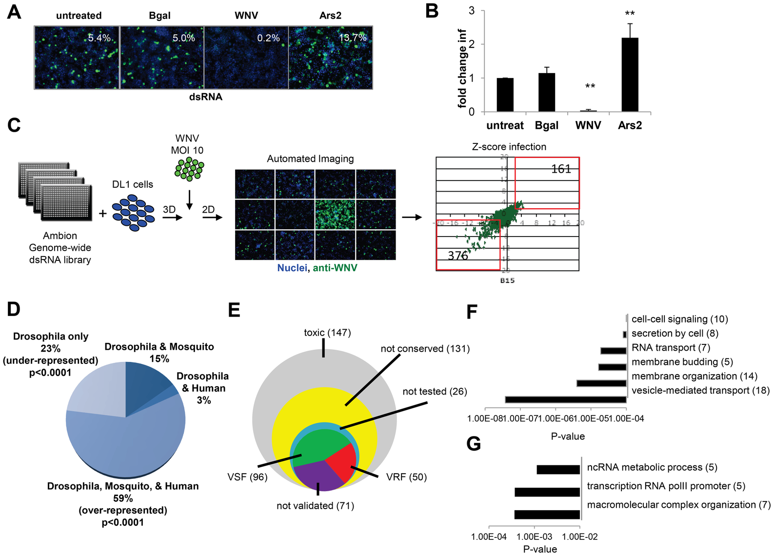 Genome-wide RNAi screen in <i>Drosophila</i> for host factors involved in WNV infection.
