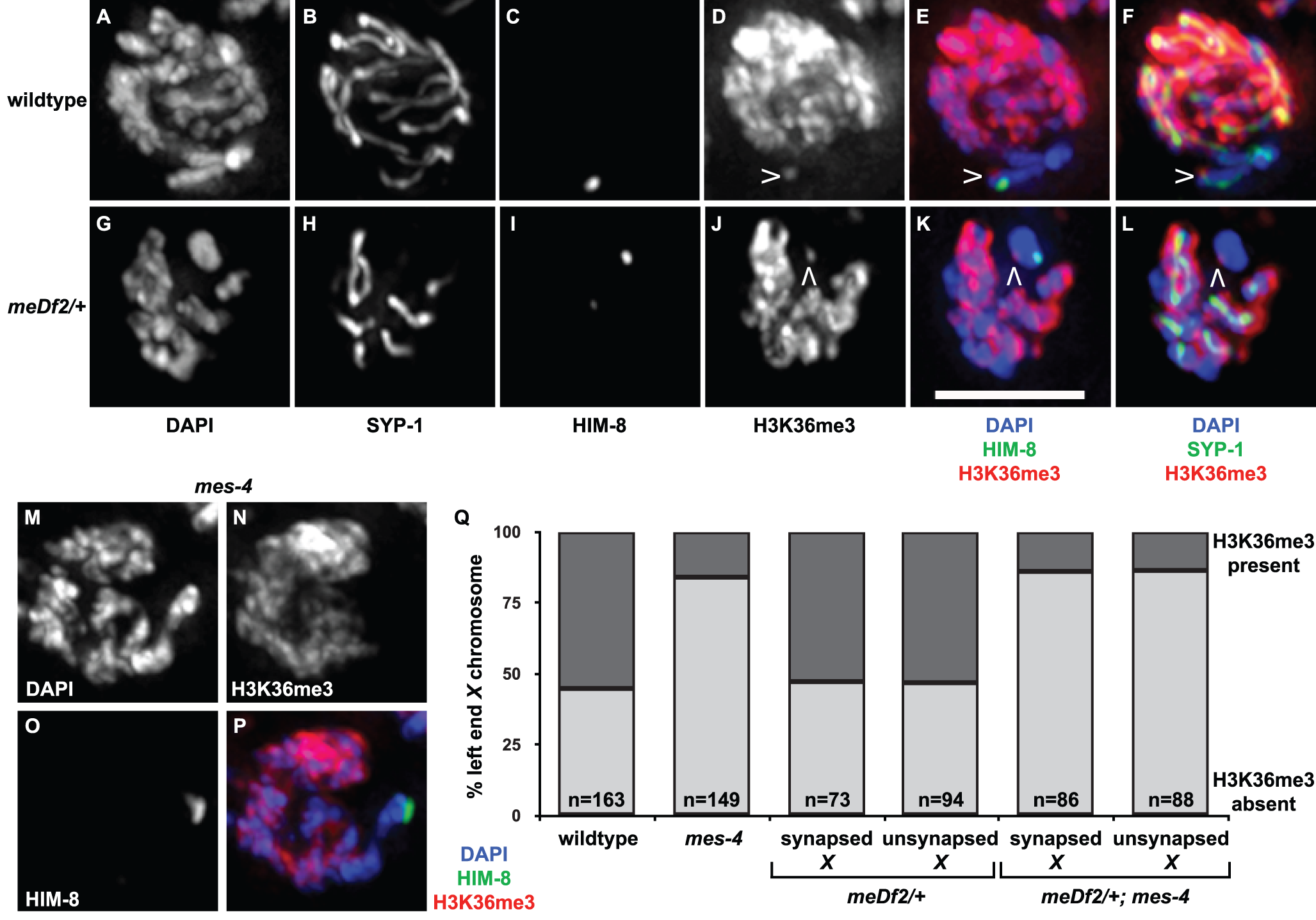 Is H3K36me3 the relevant chromatin modification for synapsis checkpoint activation?