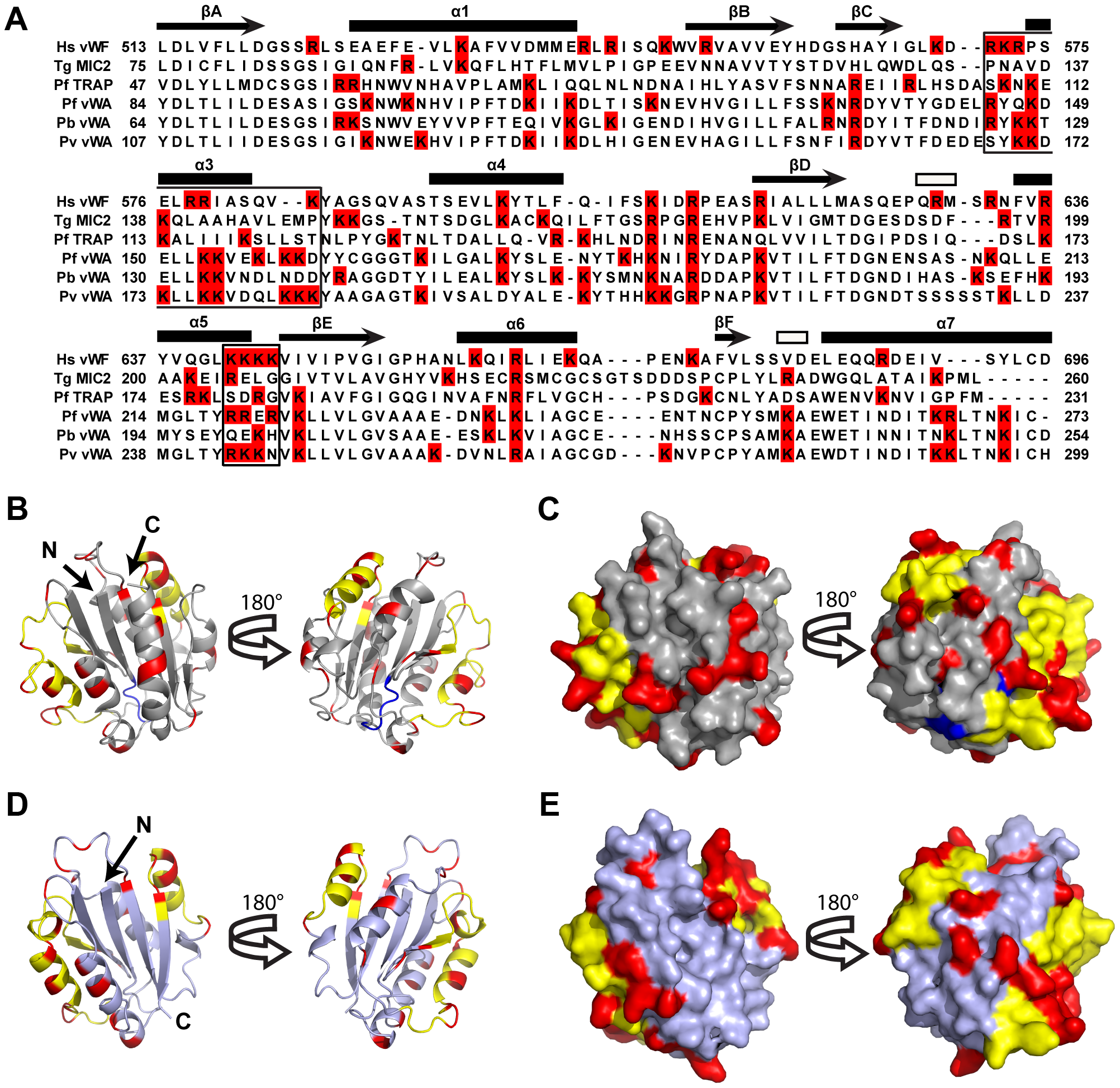 A Homology model of <i>Plasmodium falciparum</i> CTRP provides insight into the potential VS1 binding motifs.