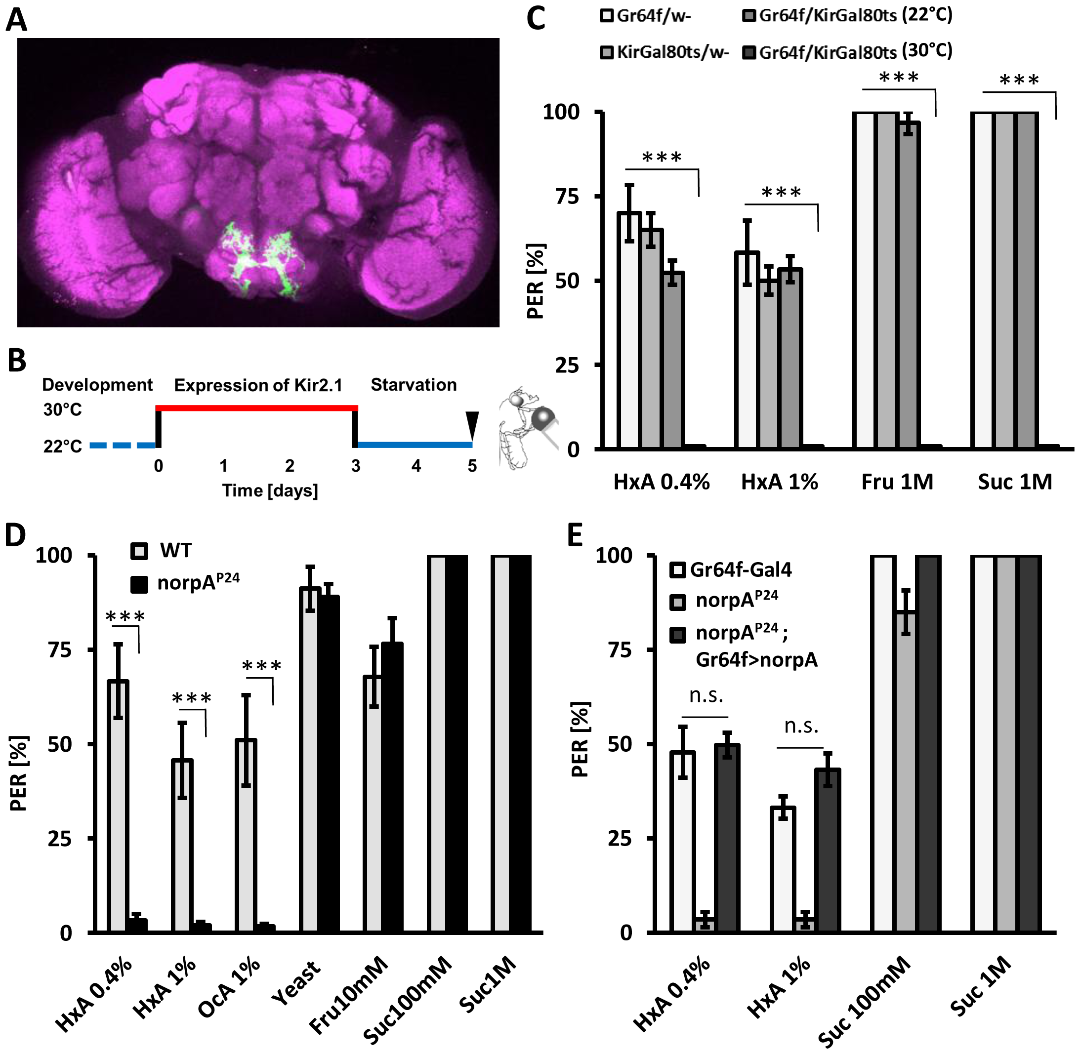 Fatty acids taste requires intact PLC signaling specifically in sugar-sensing neurons.