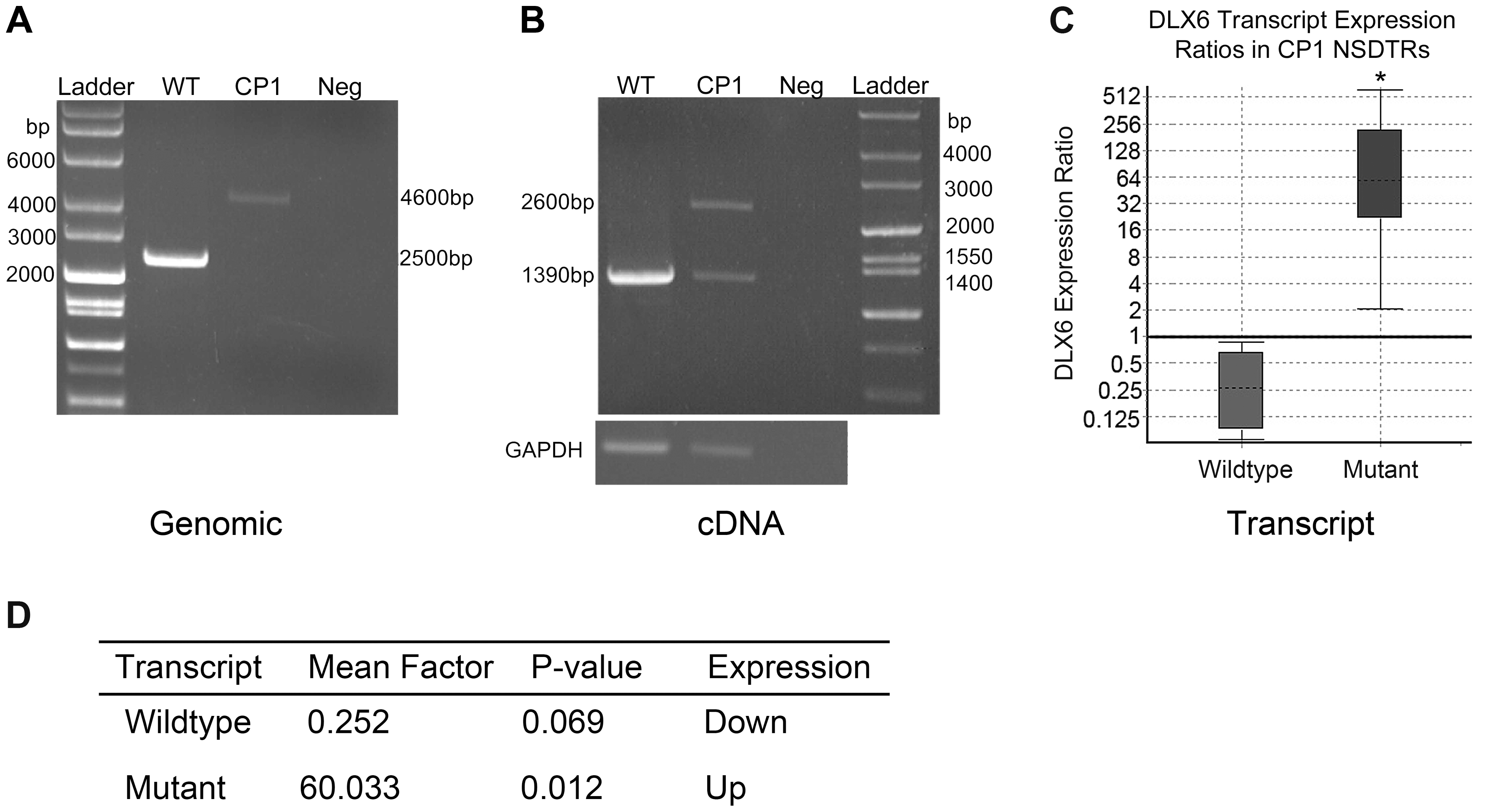 PCR amplification and expression analysis of LINE insertion in CP1 and WT NSDTRs.