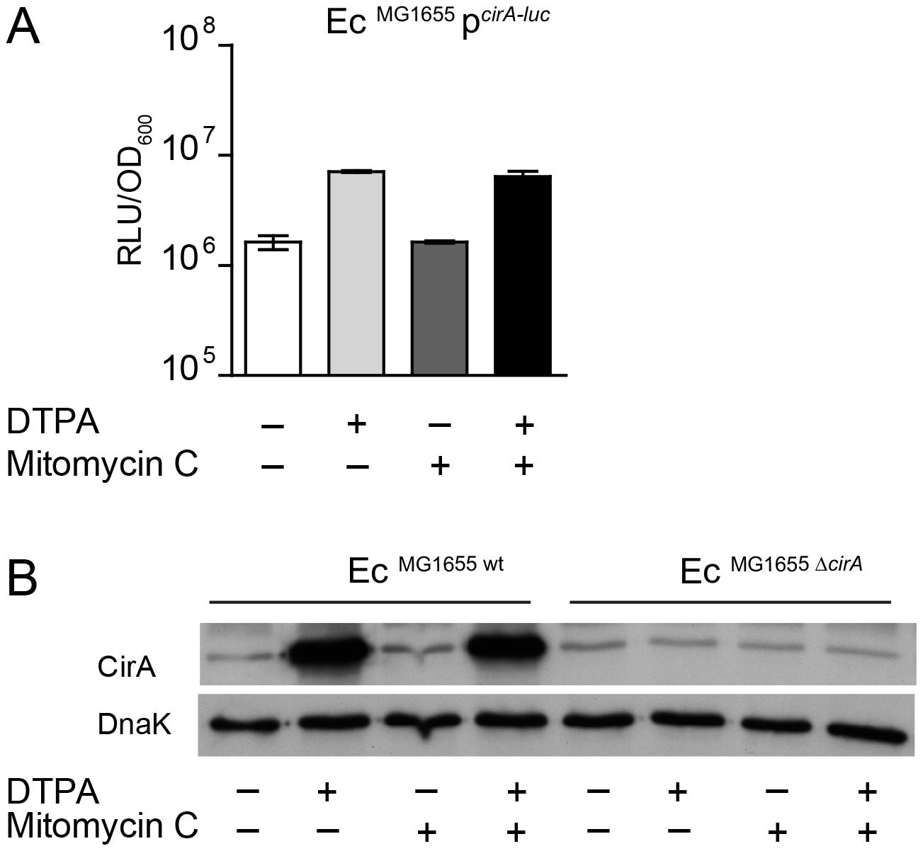 <i>E. coli cirA</i> expression is upregulated in response to iron limitation.