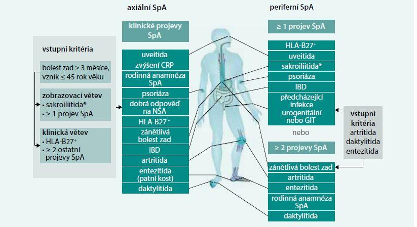 Schéma 1. Axiální a periferní SpA dle klasifikačních kritérií ASAS. Upraveno podle [29]