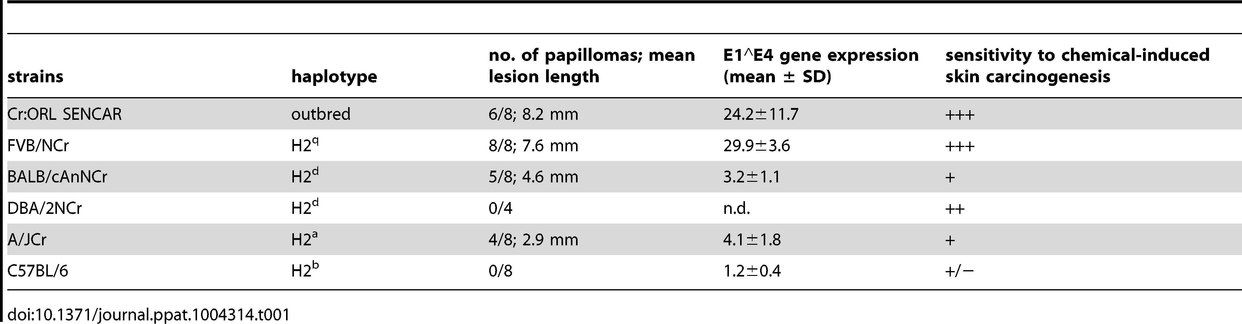 Summary of papilloma development under cyclosporin A treatment in different murine strains.