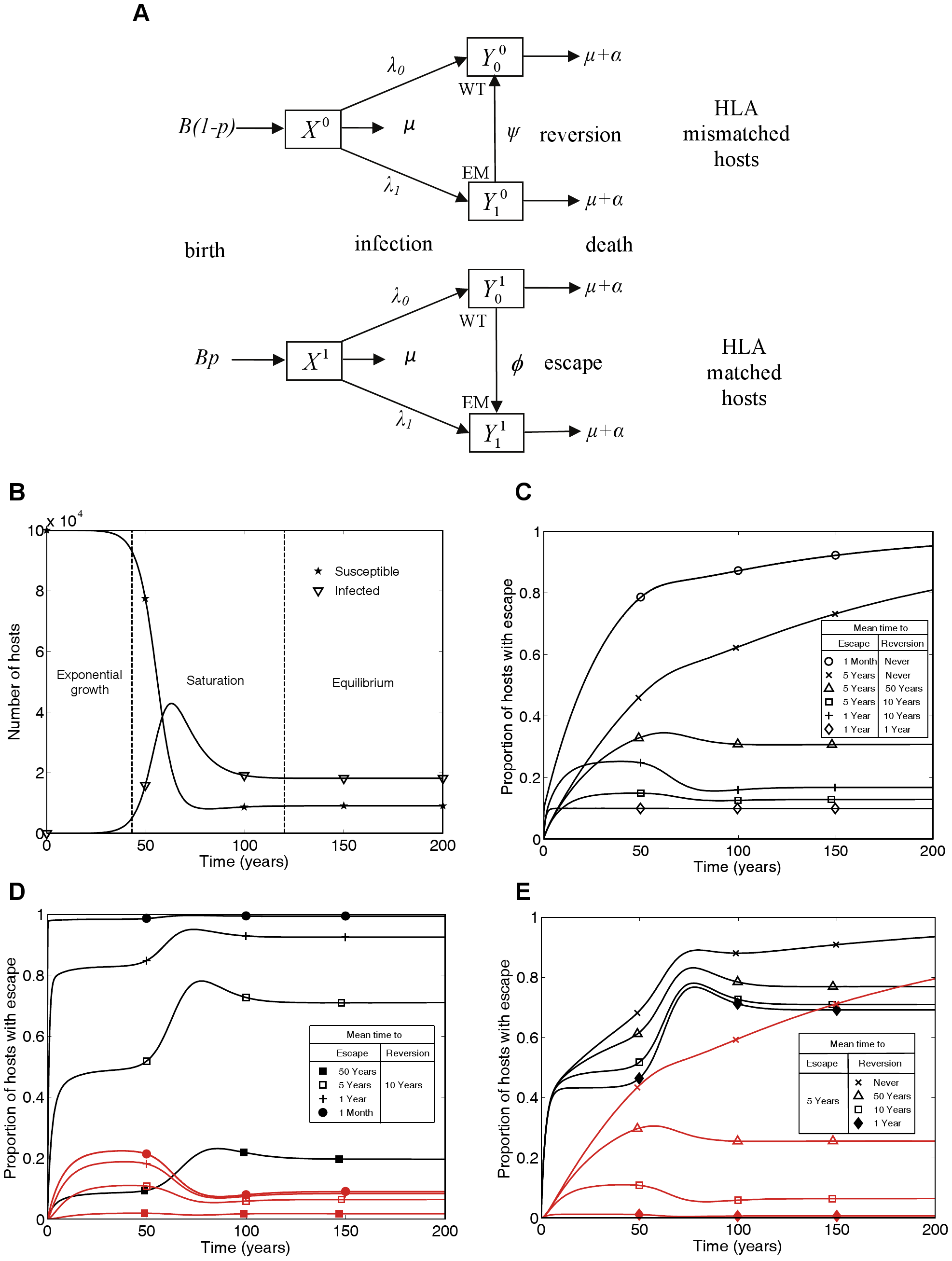 A mathematical model of within-host evolution and between-host transmission of escape mutants at a single CTL epitope.