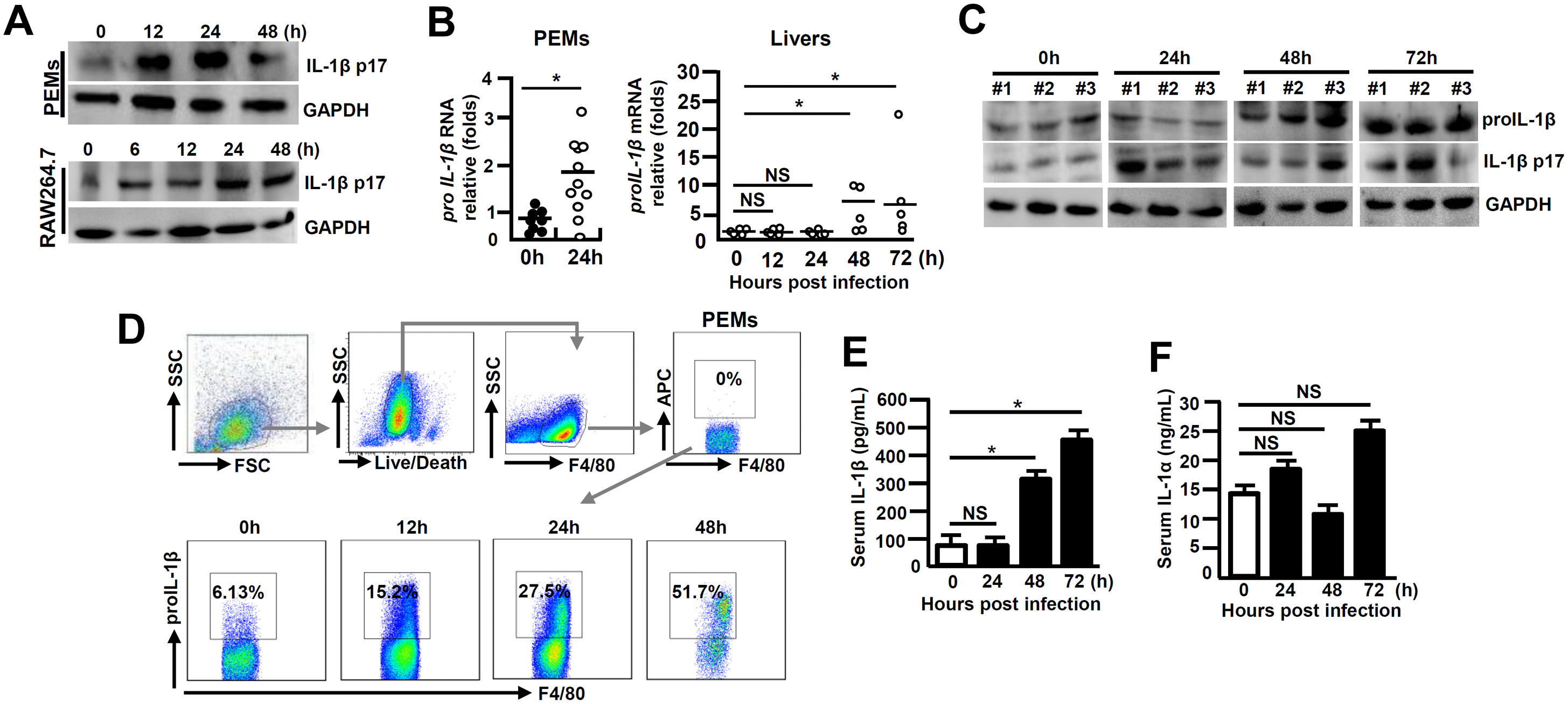 Augmented IL-1β expression during viral FH.