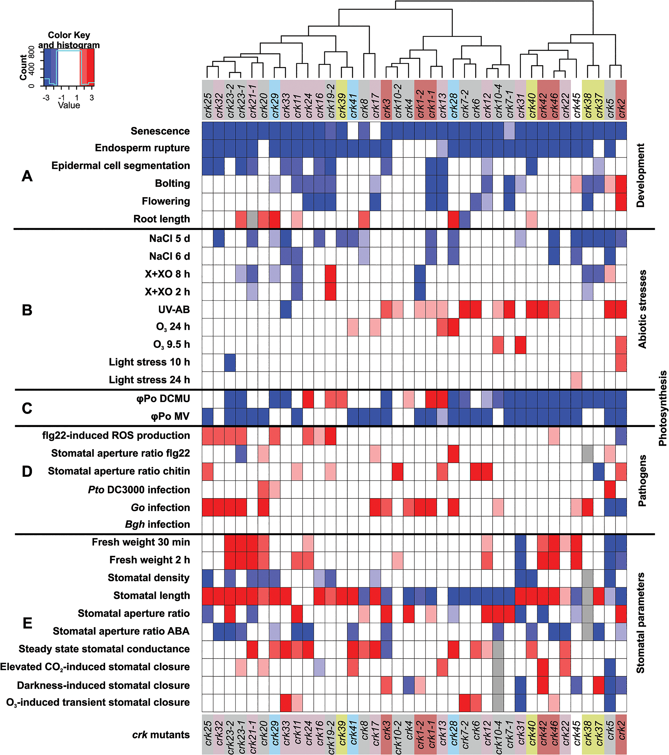 Integrated cluster analysis of <i>crk</i> mutant phenotypes.