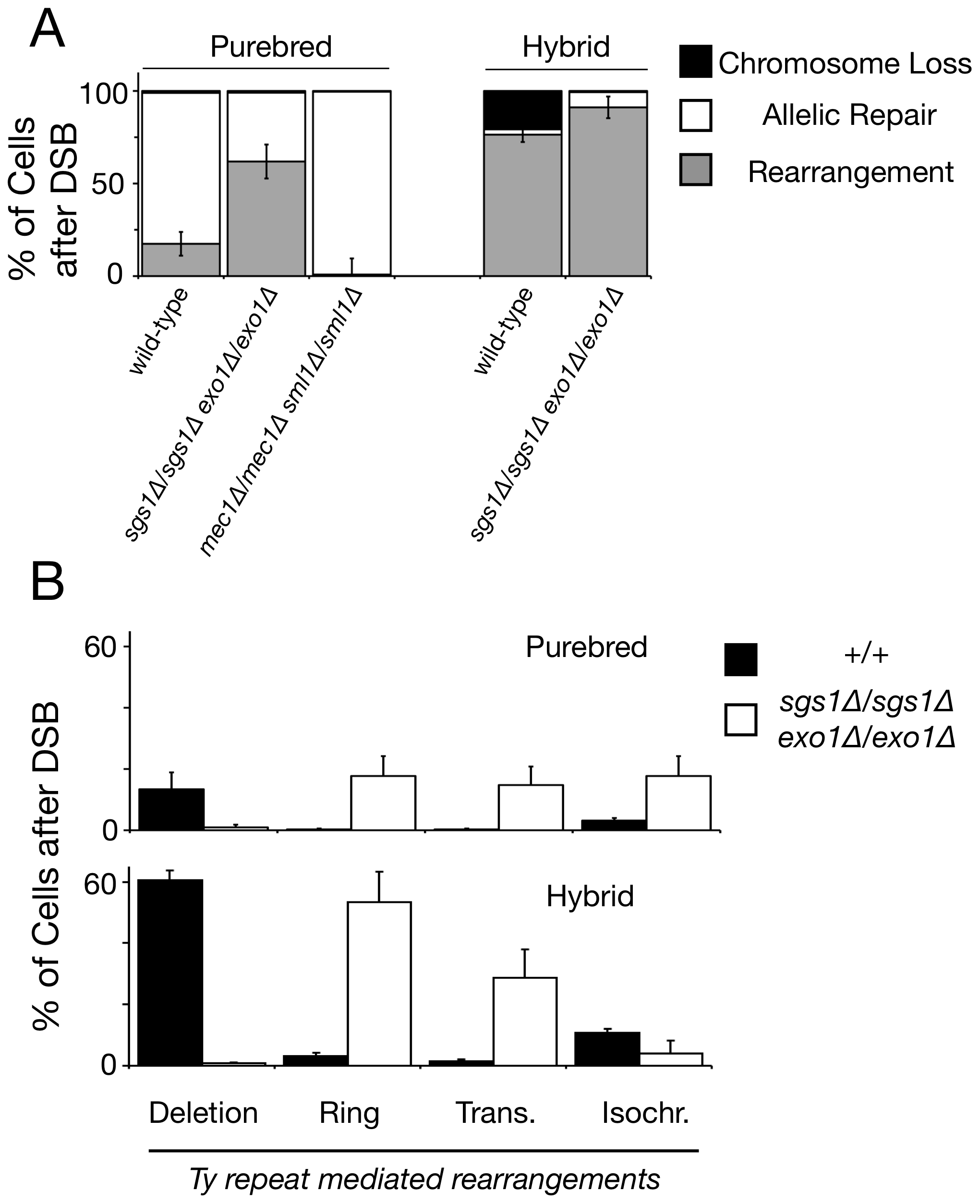 Recipient Ty elements located 12–48 kilobases away from the break site mediate chromosome rearrangements more frequently in <i>sgs1Δ/sgs1Δ exo1Δ/exo1Δ</i> mutant diploids than wild-type diploids.