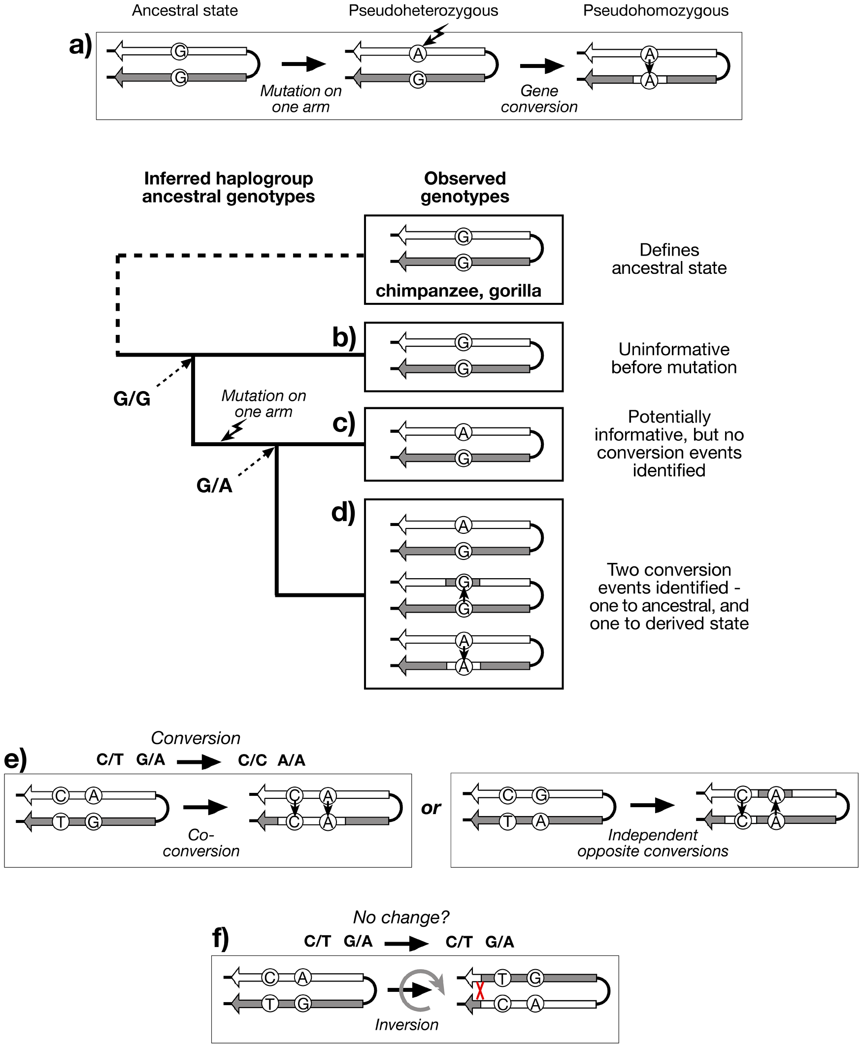 Recognition of gene conversion, co-conversion and inversion events.