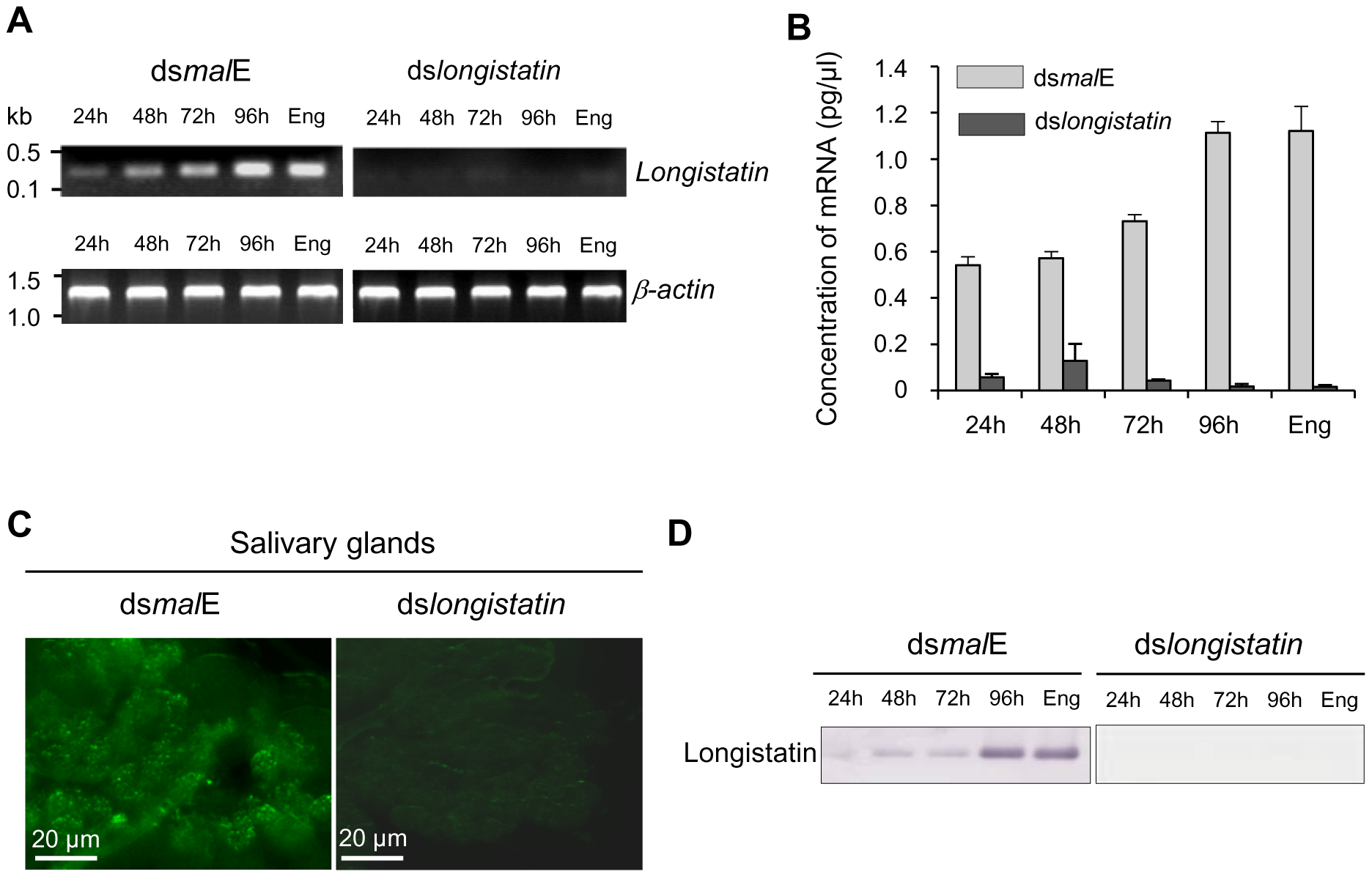 Post-transcriptional silencing of longistatin-specific gene in adult ticks by injecting dsRNA.