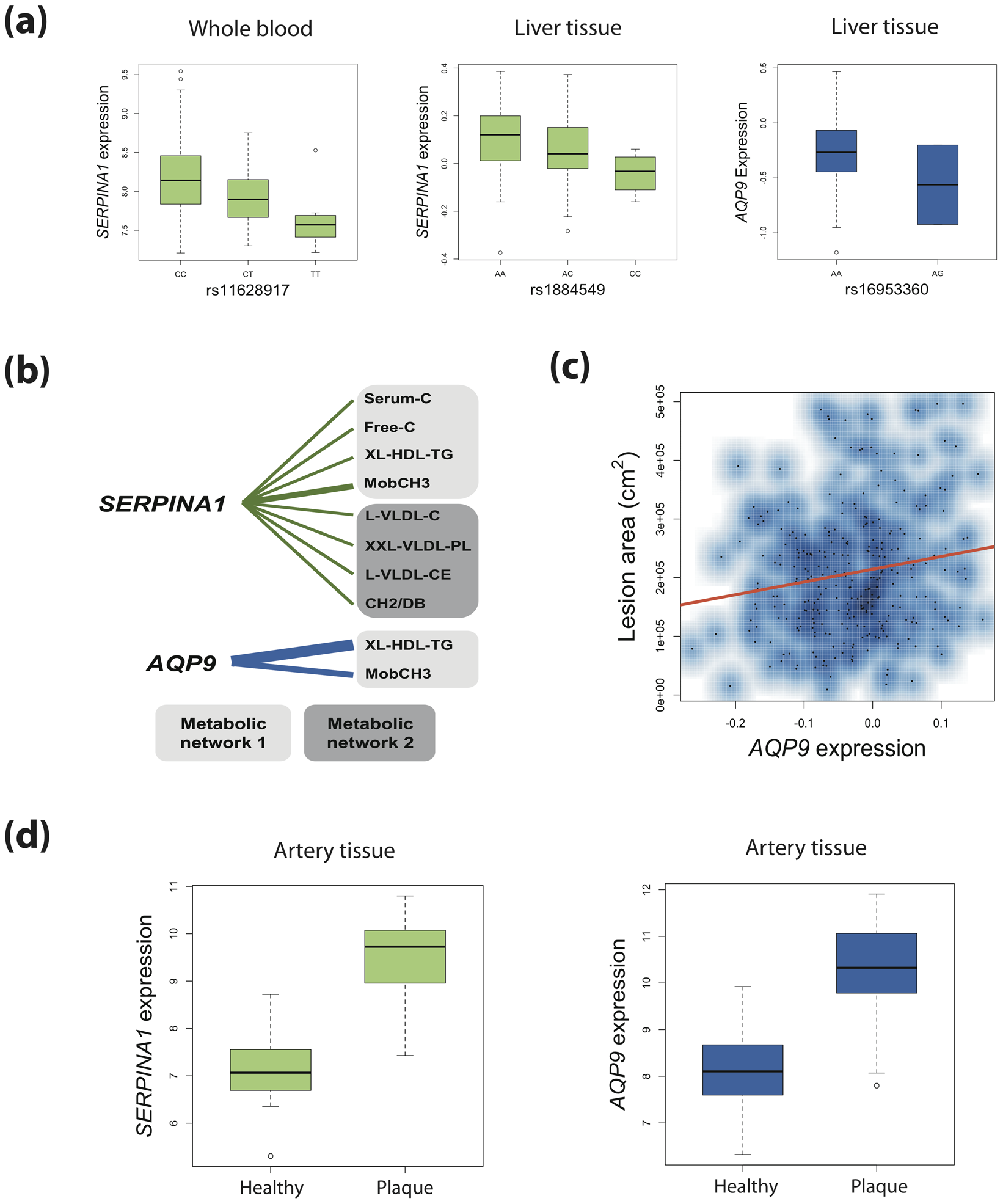 Connecting genetic variation, gene expression, metabolites, and atherosclerosis for <i>SERPINA1</i> and <i>AQP9</i>.