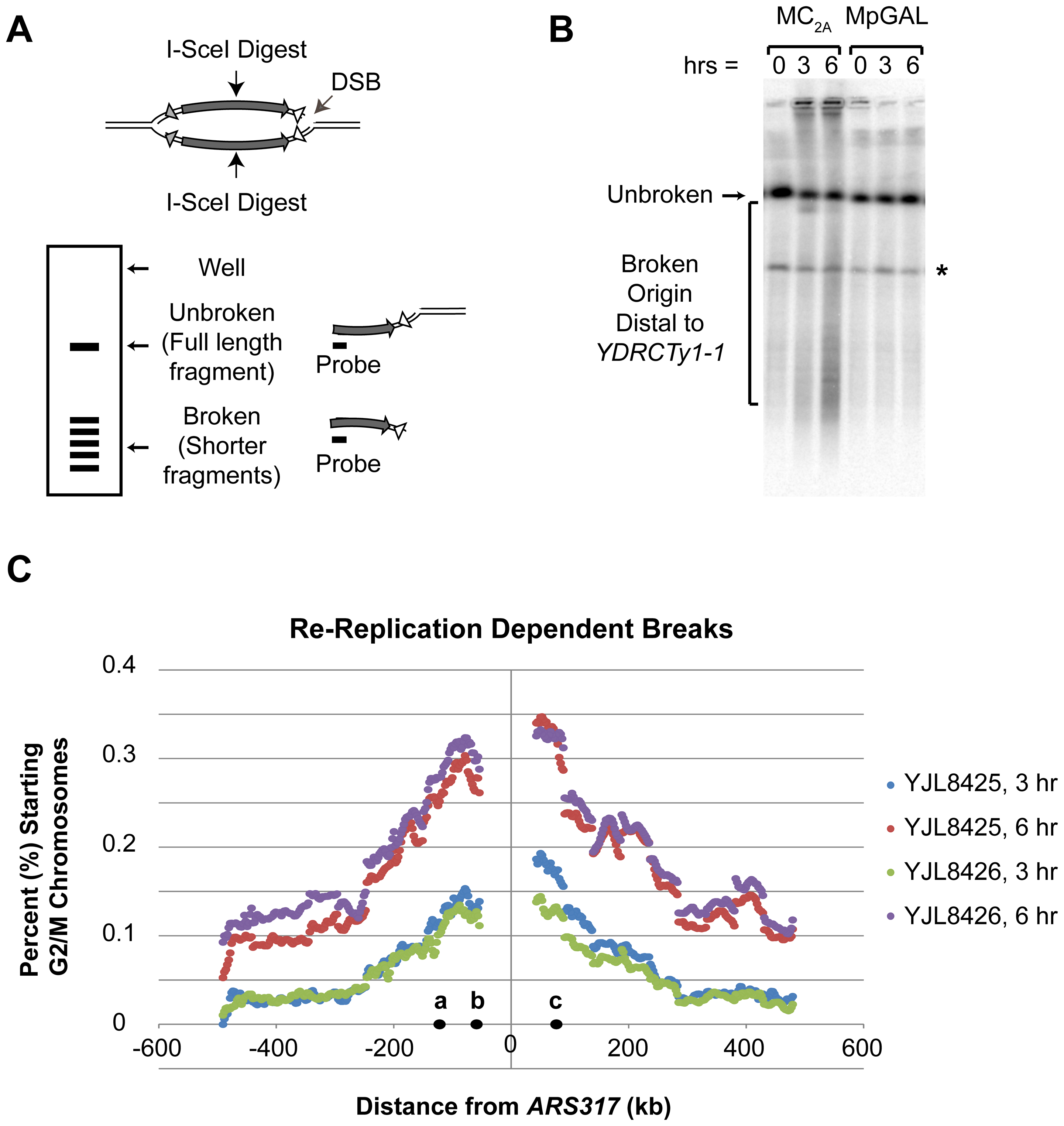 Re-replication induces double-stranded DNA breaks distal to flanking repetitive elements.