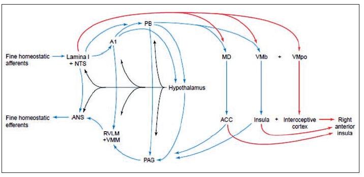 Homeostatický systém a jeho projekce do koncového mozku primátů (5)